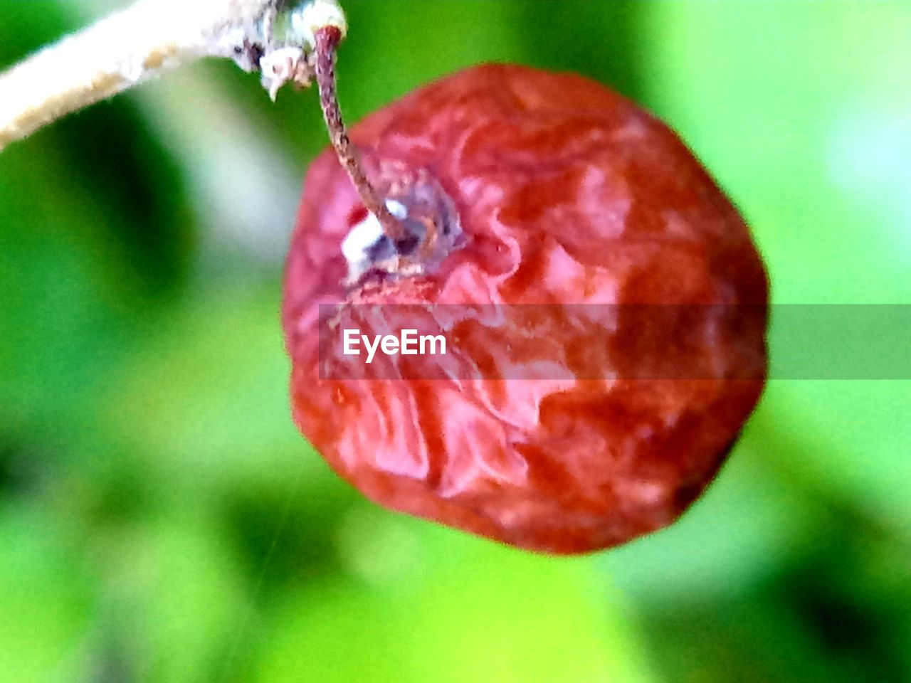 close-up, food and drink, plant, freshness, food, fruit, healthy eating, red, focus on foreground, growth, no people, nature, flower, wellbeing, day, beauty in nature, outdoors, flowering plant, vulnerability, fragility, ripe