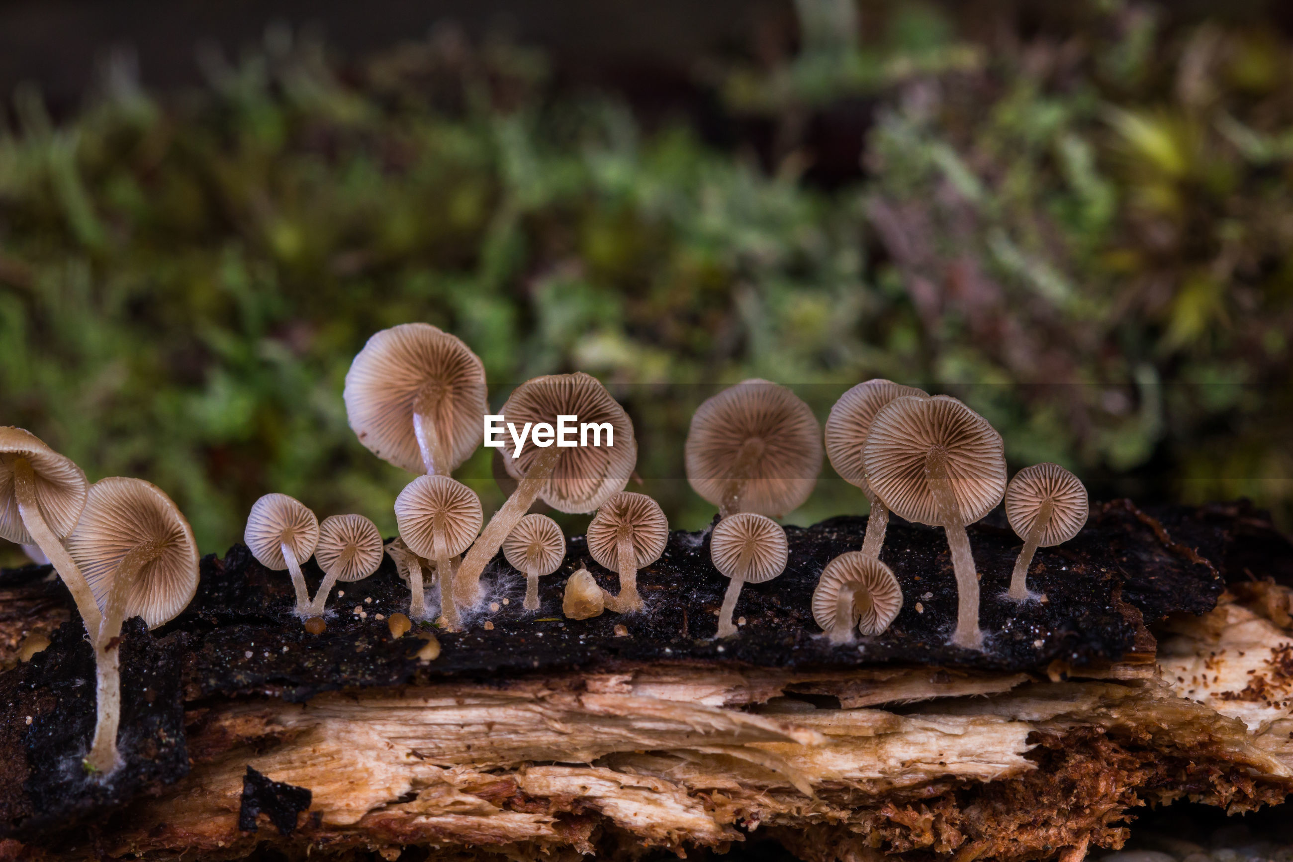 Close-up of mushrooms growing on tree trunk