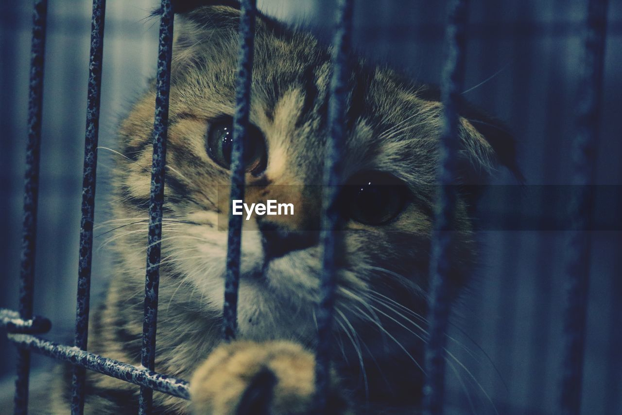 one animal, mammal, animal themes, animal, domestic, pets, domestic animals, cat, feline, close-up, domestic cat, vertebrate, animal body part, no people, selective focus, cage, animal head, whisker, portrait, looking