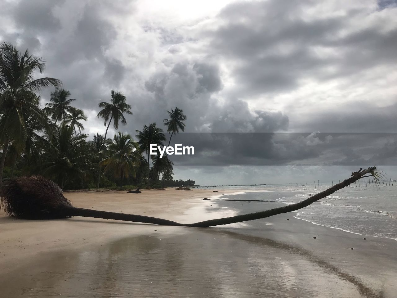 cloud - sky, sky, tree, palm tree, tropical climate, water, beauty in nature, beach, plant, nature, land, scenics - nature, sea, tranquility, tranquil scene, day, sand, no people, outdoors, coconut palm tree