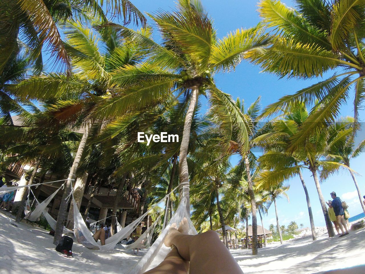 palm tree, tree, real people, day, beach, women, outdoors, low section, human leg, sunlight, lifestyles, leisure activity, sky, men, vacations, tree trunk, growth, nature, human body part, one person, adult, people