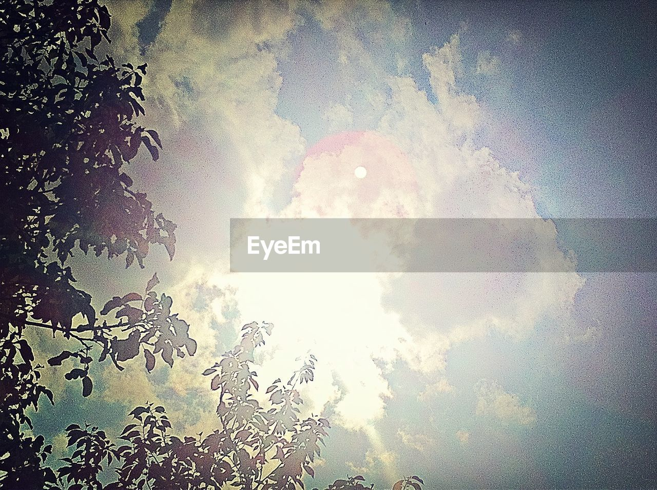 sky, low angle view, cloud - sky, nature, sun, beauty in nature, day, outdoors, no people, tree, sunlight, tranquility, scenics