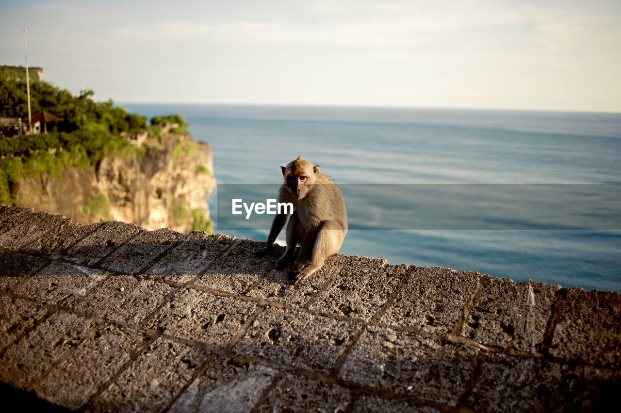 Monkey Sitting On Retaining Wall By Sea Against Sky