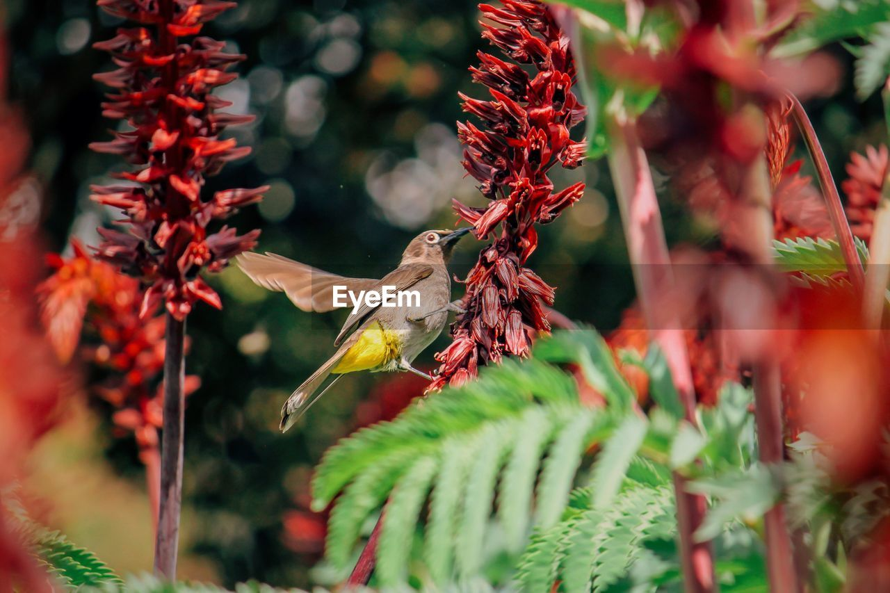 Close-Up Of Bird Pollinating Red Flowers