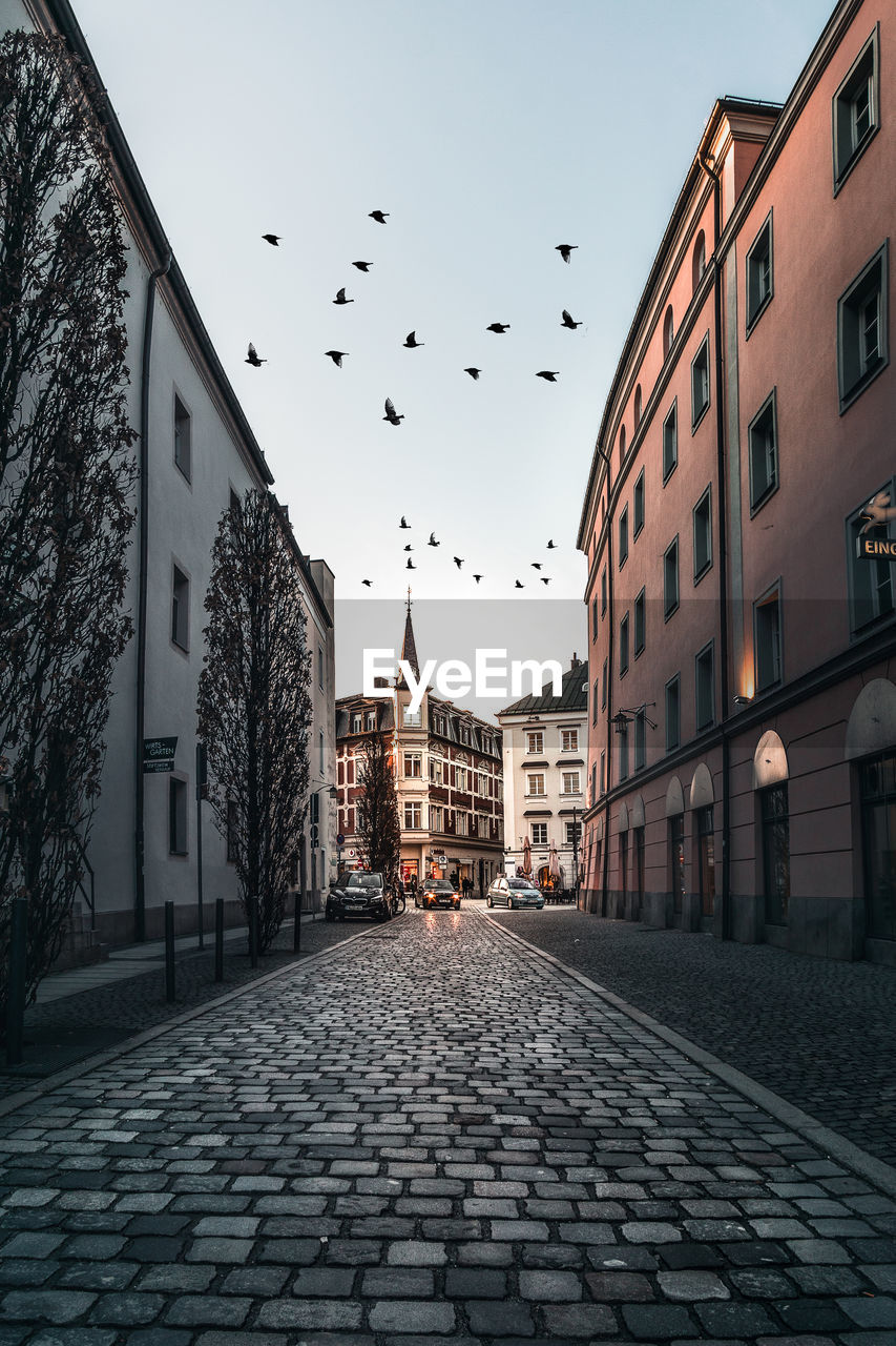 building exterior, architecture, built structure, city, vertebrate, bird, building, sky, group of animals, nature, animal, street, large group of animals, animals in the wild, animal themes, flock of birds, animal wildlife, flying, residential district, no people, outdoors, paving stone