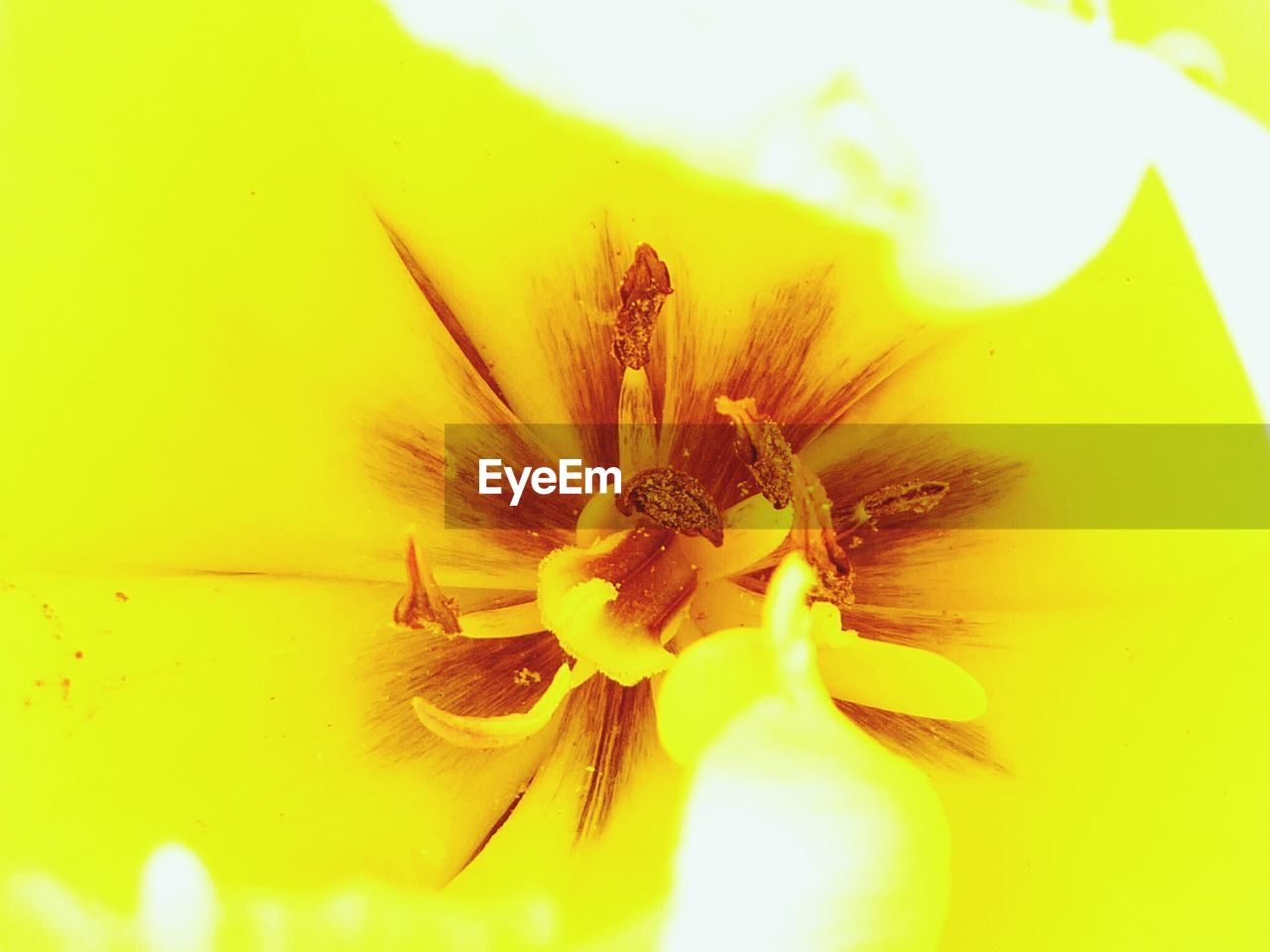 flower, petal, fragility, flower head, freshness, beauty in nature, nature, pollen, yellow, close-up, stamen, no people, growth, plant, outdoors, day
