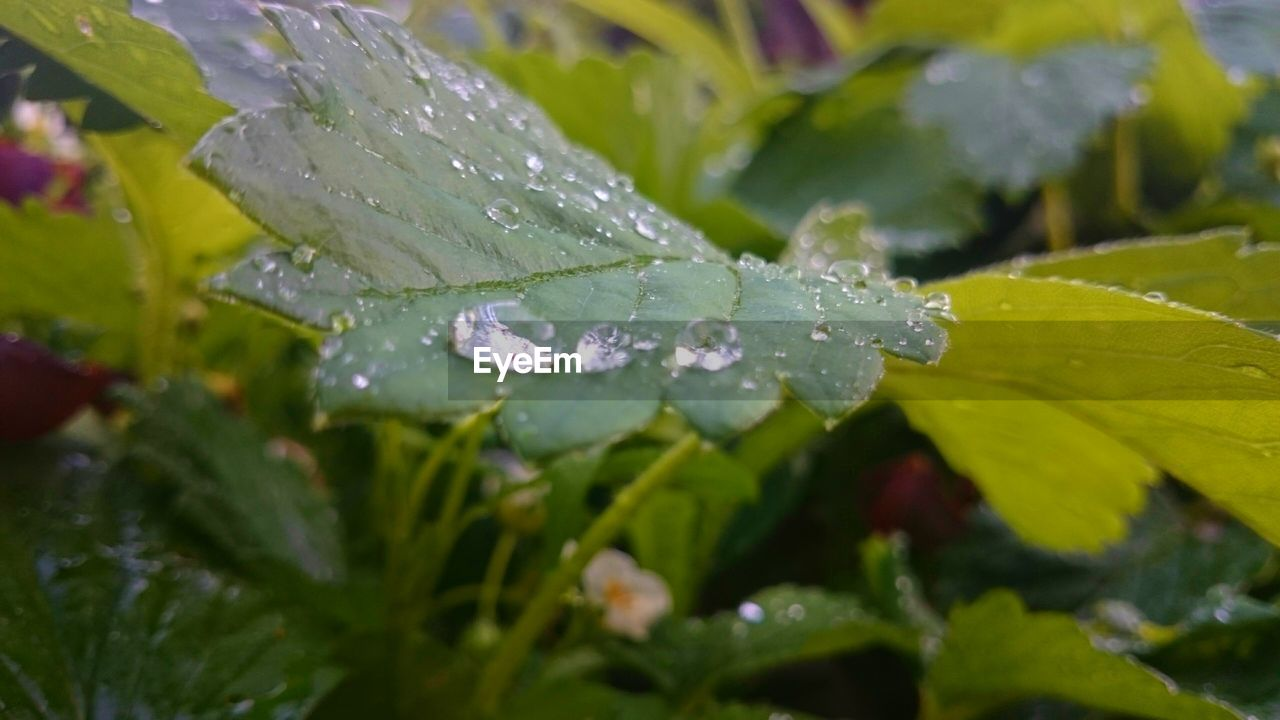 drop, water, leaf, nature, wet, green color, growth, beauty in nature, raindrop, day, selective focus, close-up, no people, freshness, outdoors, plant, fragility, purity