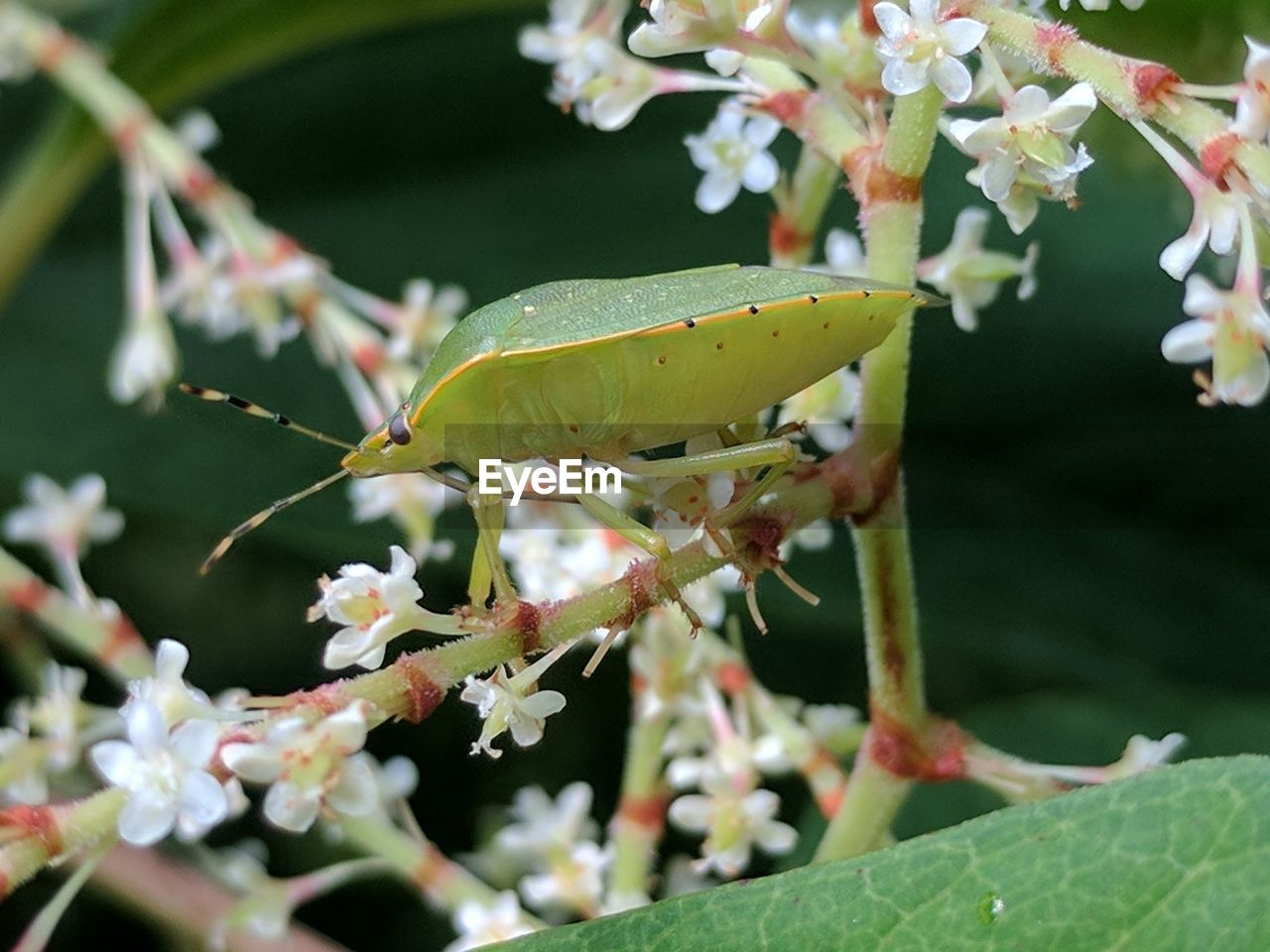 CLOSE-UP OF INSECT ON FLOWERS