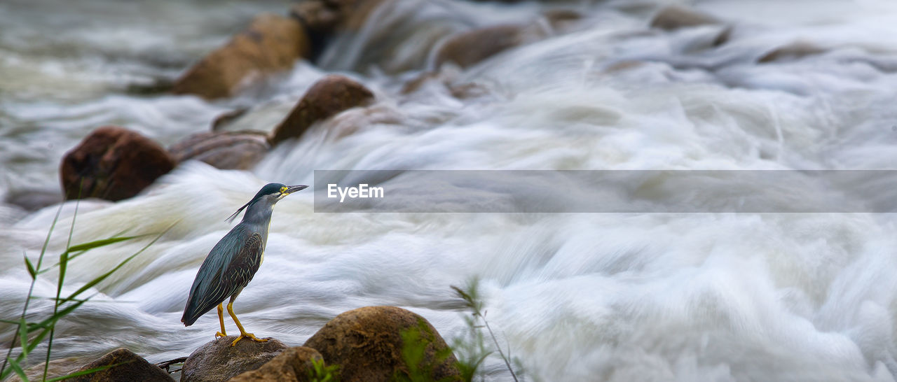 Panoramic View Of Bird Perching On Rock In River