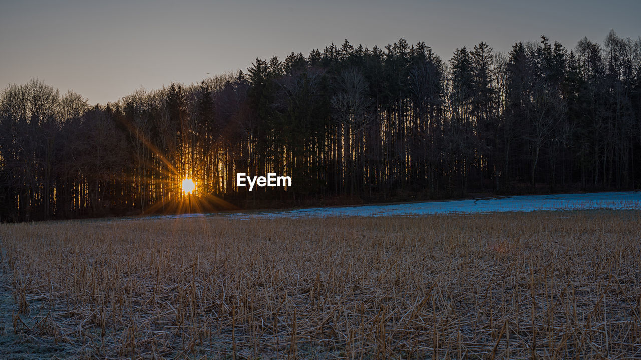 plant, tree, tranquility, tranquil scene, cold temperature, sky, beauty in nature, scenics - nature, winter, snow, non-urban scene, land, no people, nature, growth, sunset, landscape, field, environment, outdoors