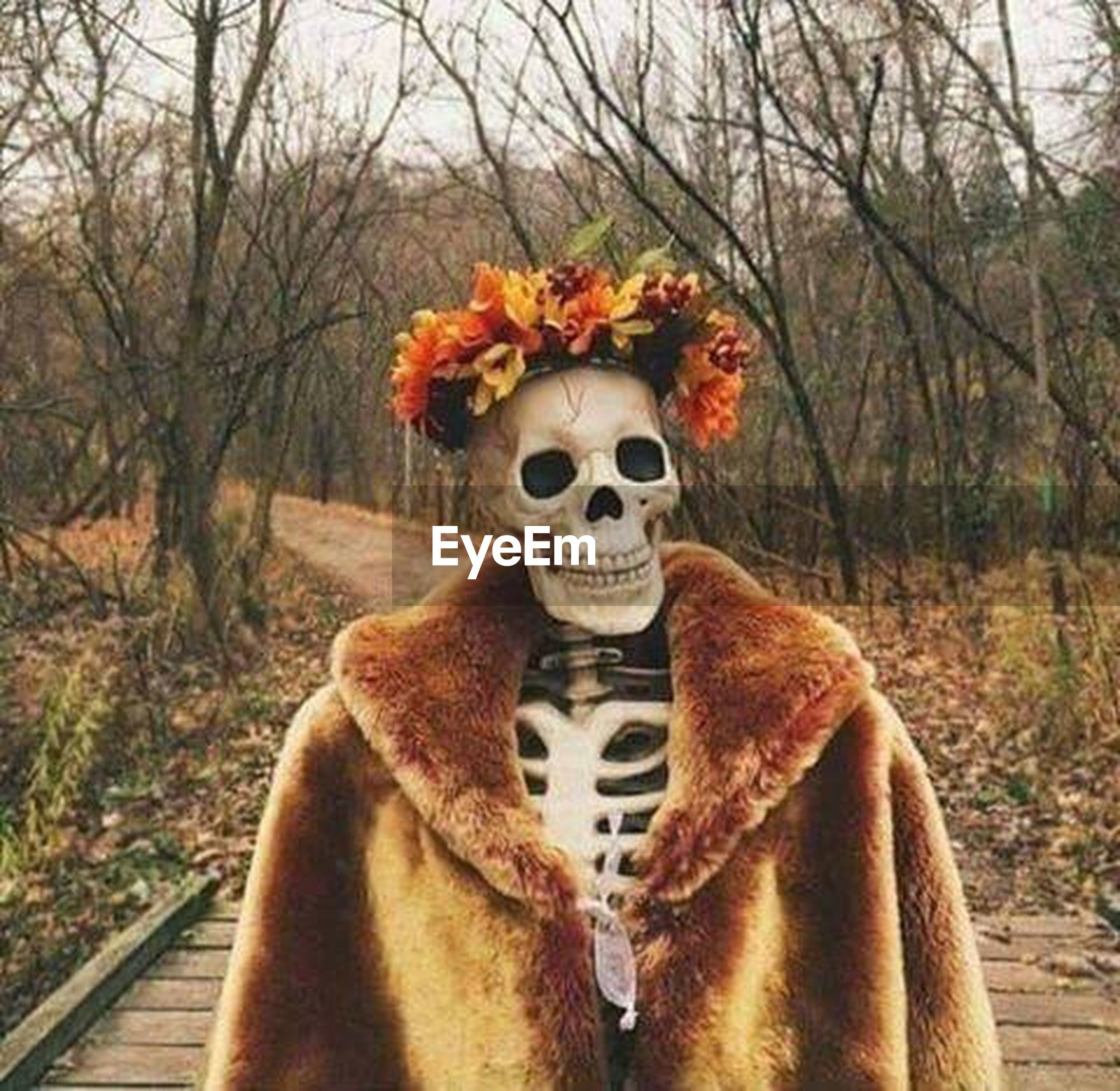 autumn, halloween, tree, outdoors, no people, day