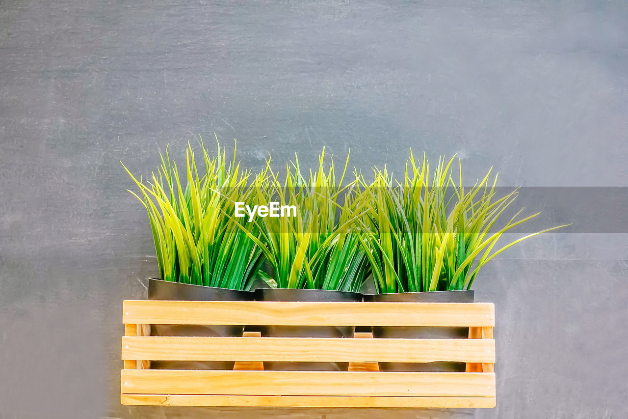 growth, plant, green color, no people, nature, wood - material, day, bench, seat, leaf, outdoors, plant part, close-up, beauty in nature, yellow, wall - building feature, potted plant, grass, freshness