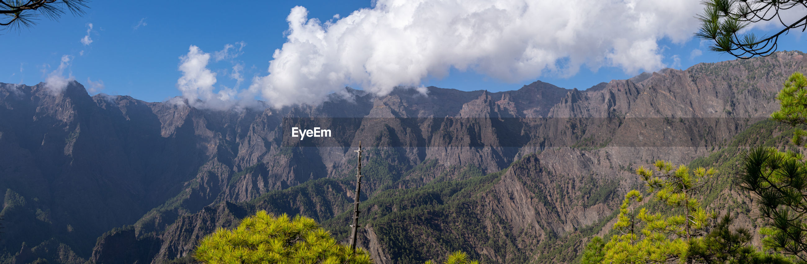 Volcanic landscape pine forest at astronomy viewpoint llanos del jable, la palma, canaries, spain