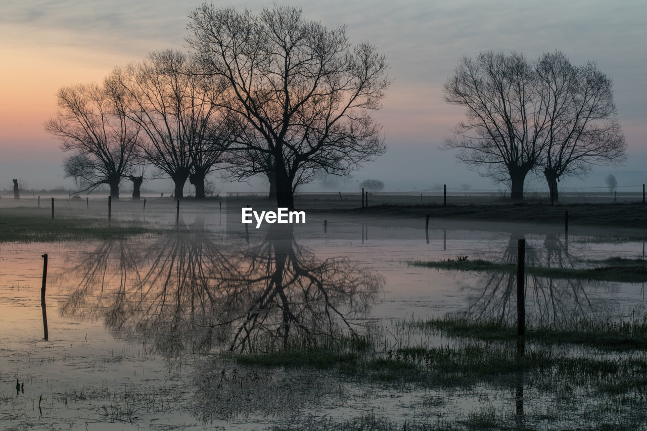 BARE TREES BY LAKE DURING SUNSET
