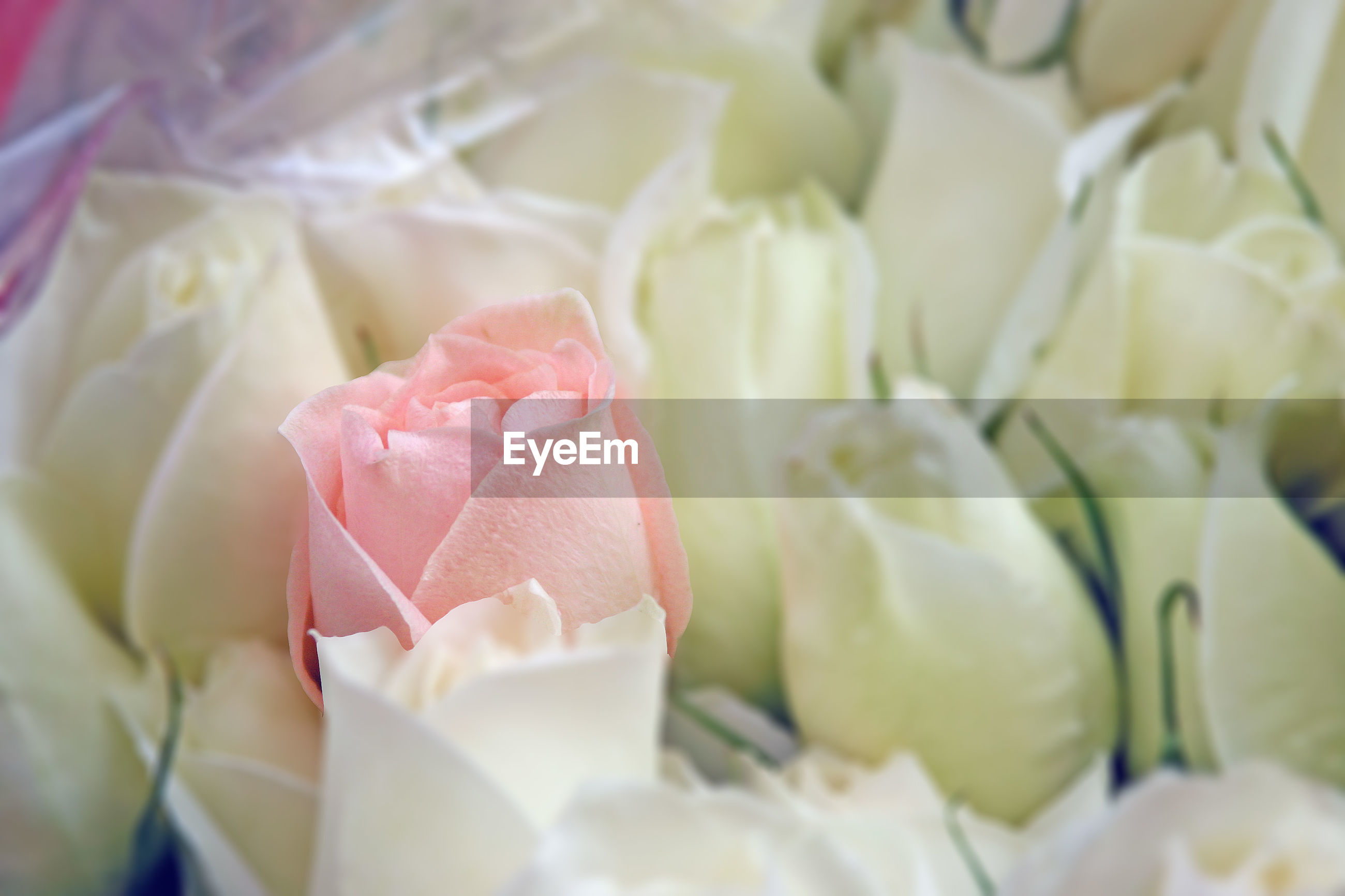 Close-up of rose bouquet for sale at market stall