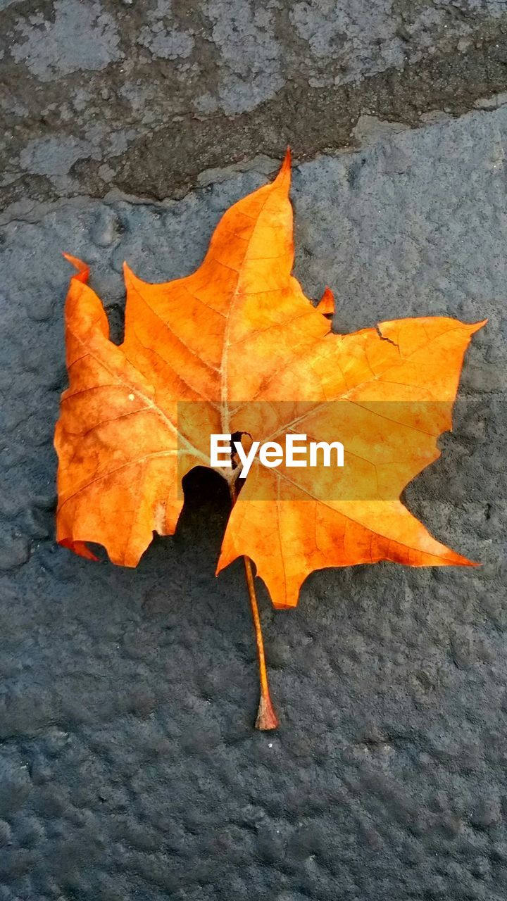 change, leaf, autumn, orange color, dry, maple, nature, maple leaf, outdoors, day, leaves, fallen, beauty in nature, close-up, no people