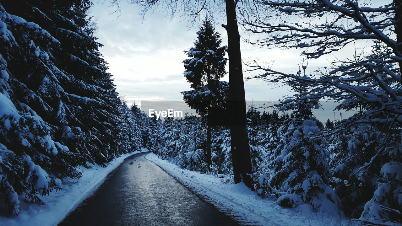 Road Passing Through Snow Covered Trees