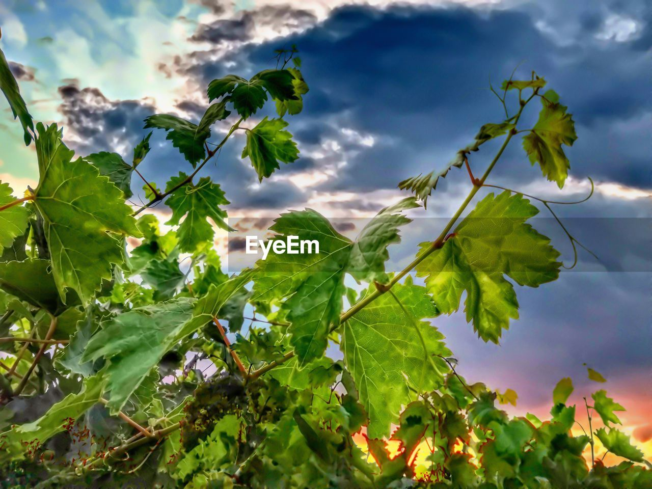 leaf, plant part, plant, growth, beauty in nature, green color, sky, nature, cloud - sky, day, close-up, low angle view, no people, freshness, outdoors, vulnerability, selective focus, fragility, tranquility, sunlight