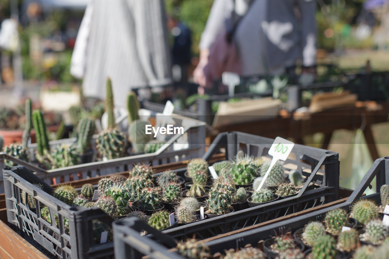 incidental people, selective focus, market, retail, business, plant, nature, market stall, for sale, growth, day, botany, label, outdoors, small business, focus on foreground, close-up, beauty in nature, food, green color, retail display, plant nursery