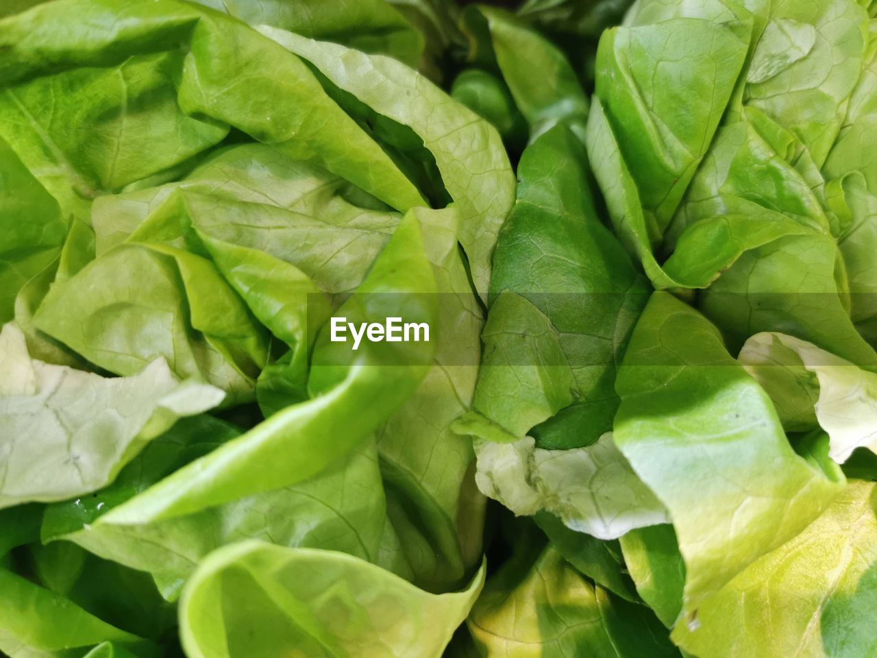 plant part, leaf, green color, food and drink, vegetable, food, healthy eating, close-up, wellbeing, full frame, freshness, no people, backgrounds, raw food, nature, lettuce, plant, day, growth, leaf vegetable, leaves, vegetarian food