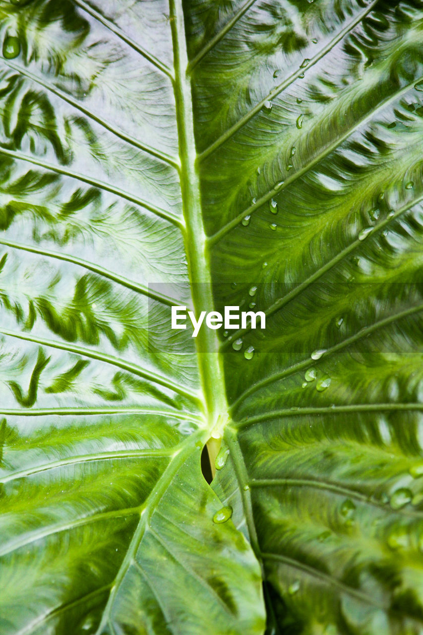 leaf, green color, growth, nature, plant, frond, botany, freshness, close-up, day, full frame, beauty in nature, no people, fern, backgrounds, outdoors, palm tree, biology, tree