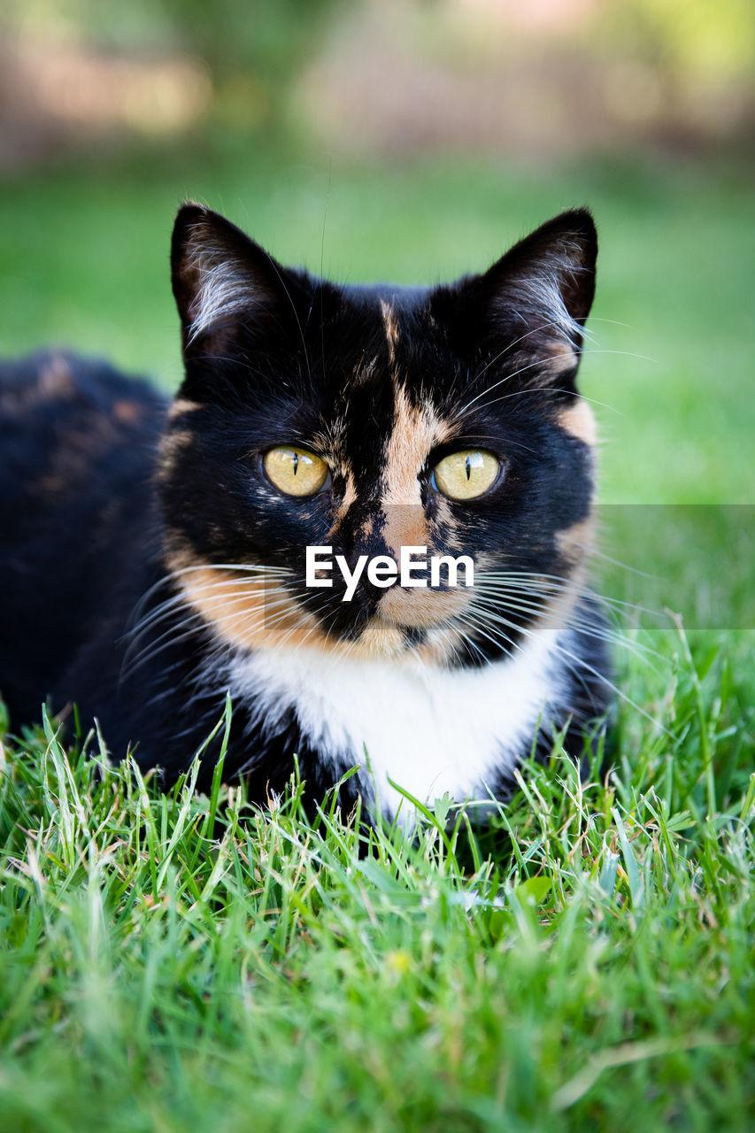 PORTRAIT OF BLACK CAT ON GRASS