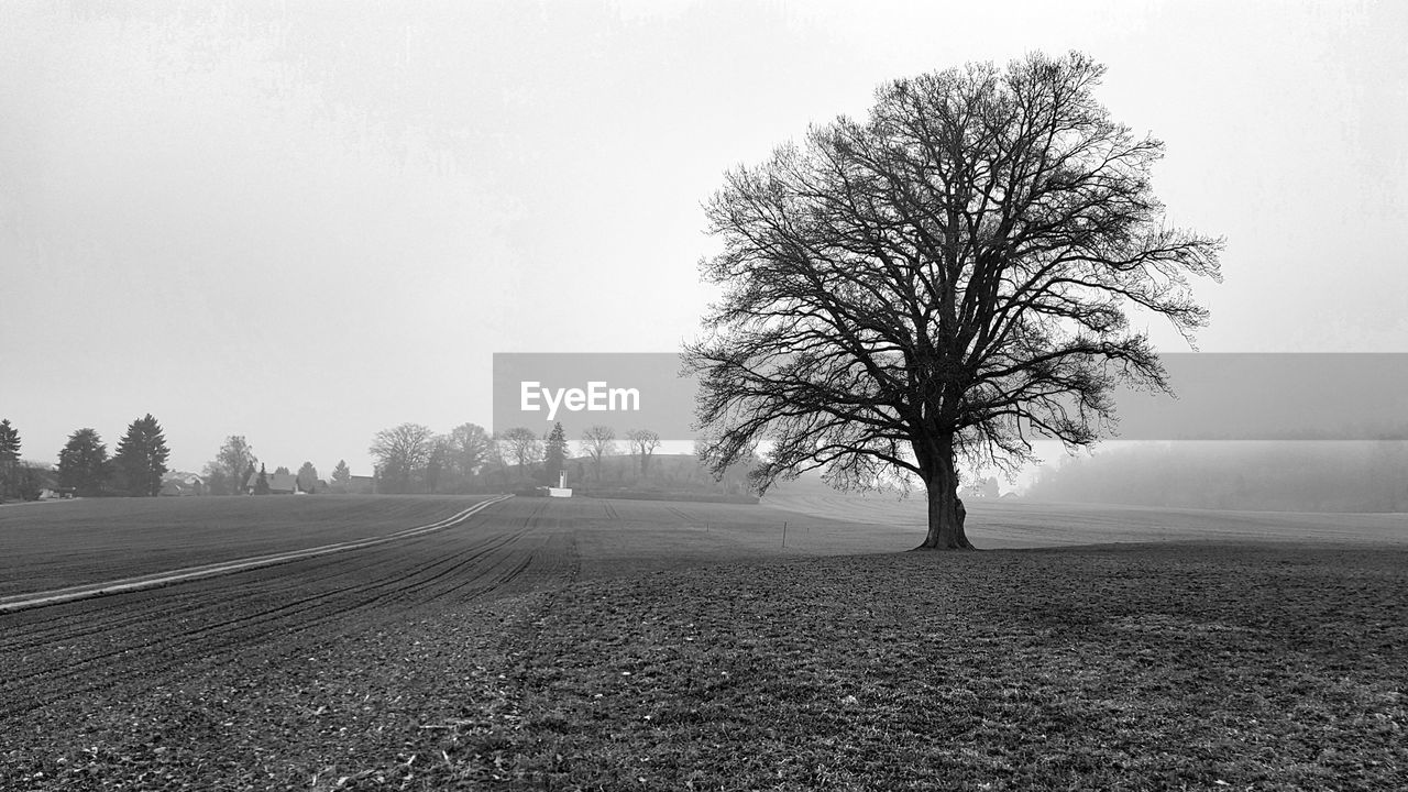 tree, bare tree, landscape, tranquility, tranquil scene, nature, beauty in nature, fog, day, outdoors, cold temperature, winter, branch, lone, no people, sky
