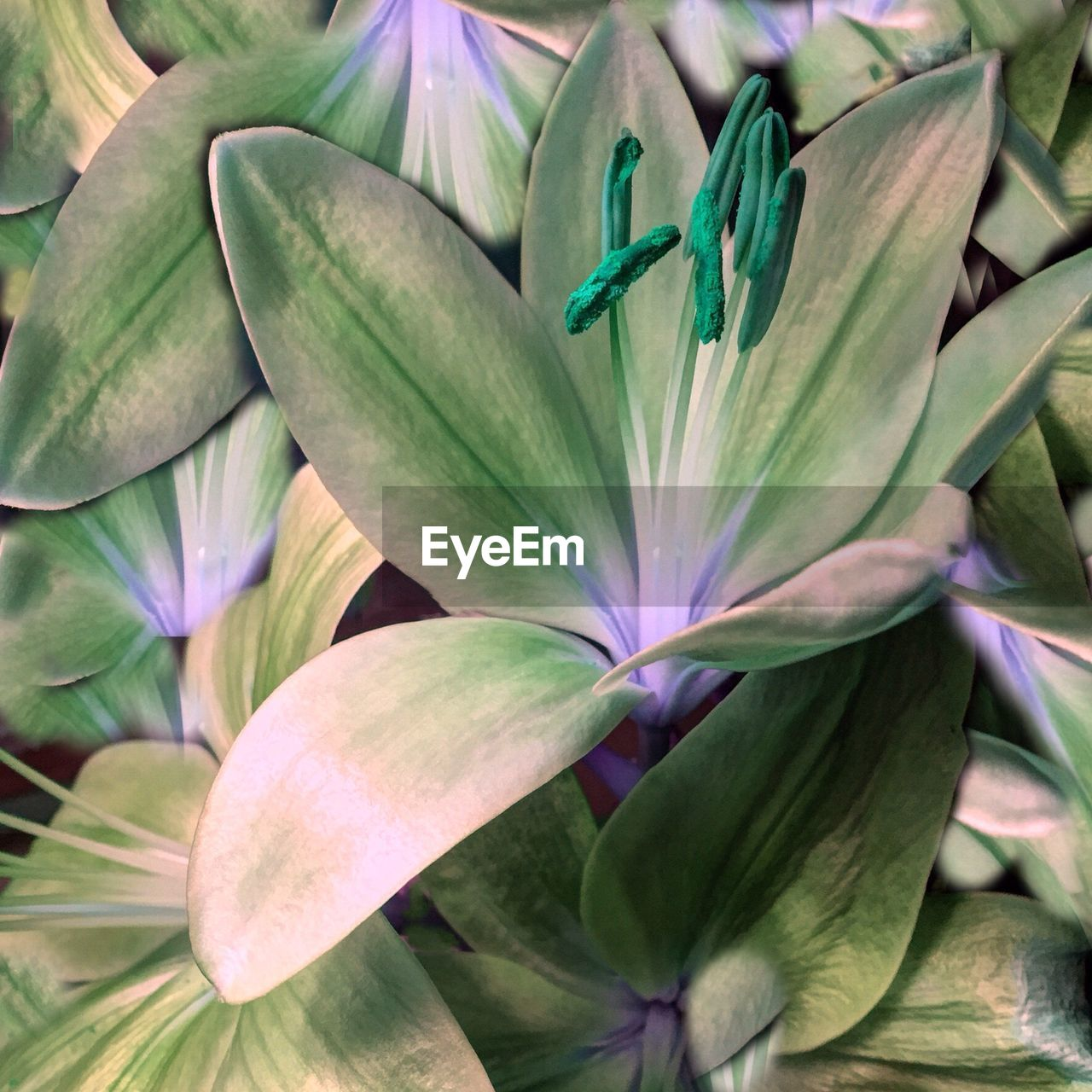 green color, flower, growth, no people, leaf, petal, nature, beauty in nature, plant, day, freshness, full frame, flower head, outdoors, fragility, close-up, blooming