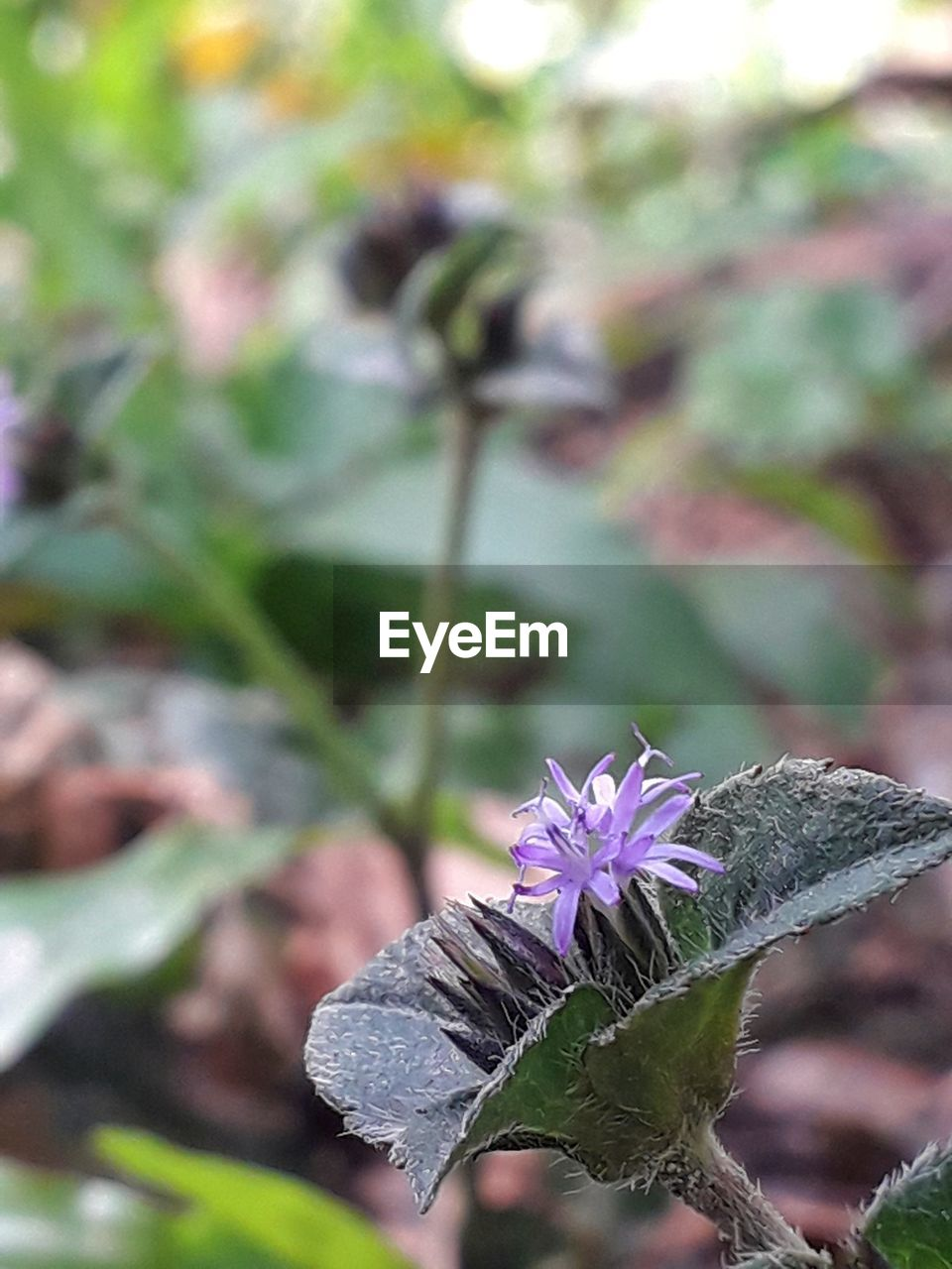 flowering plant, flower, plant, vulnerability, fragility, focus on foreground, beauty in nature, close-up, purple, freshness, growth, inflorescence, day, flower head, petal, nature, outdoors, no people, plant part, leaf, pollination