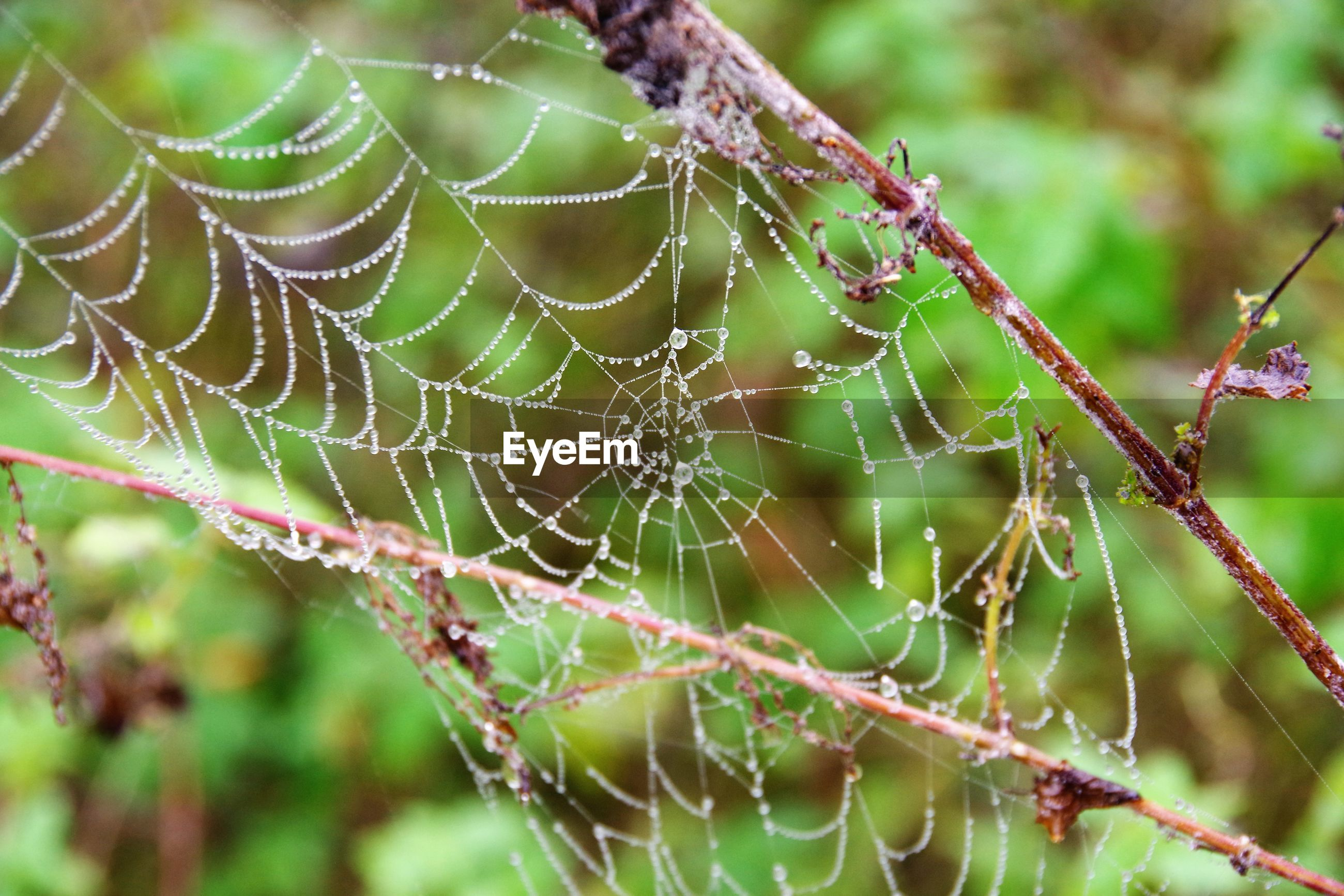 CLOSE-UP OF SPIDER AND WEB ON LEAF
