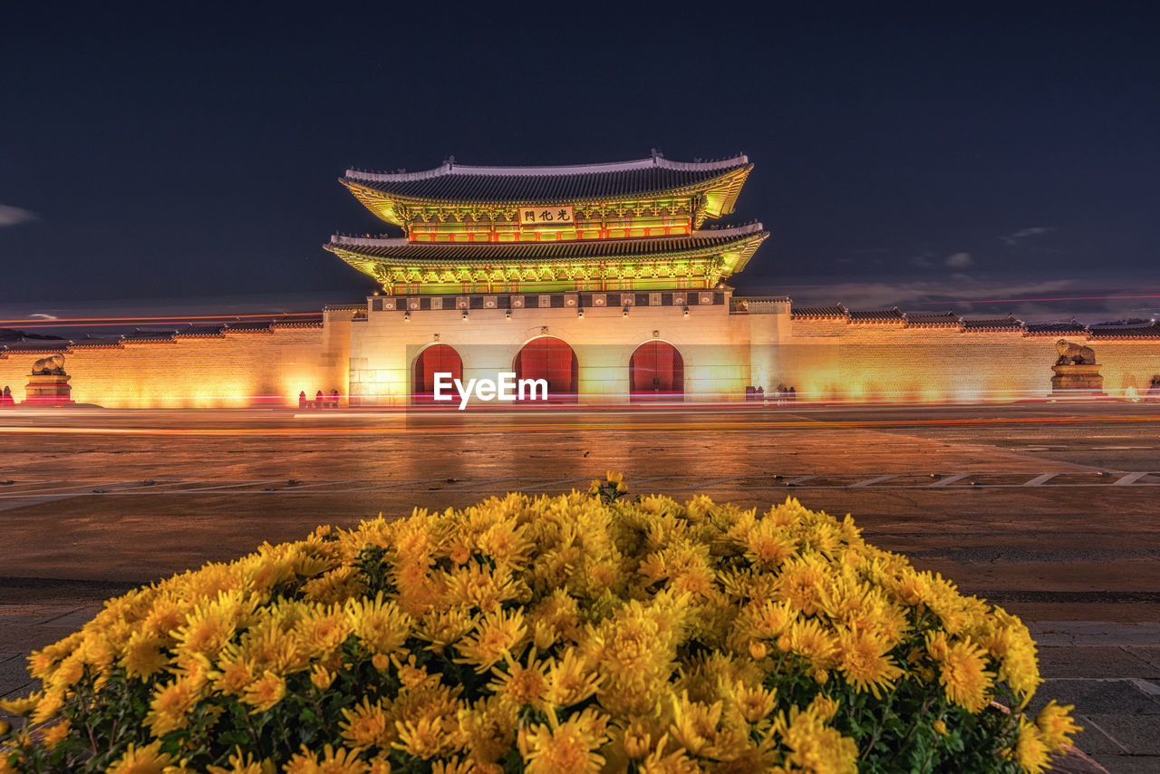 architecture, illuminated, built structure, flower, night, building exterior, flowering plant, plant, travel destinations, tourism, nature, history, the past, travel, sky, building, belief, city, place of worship