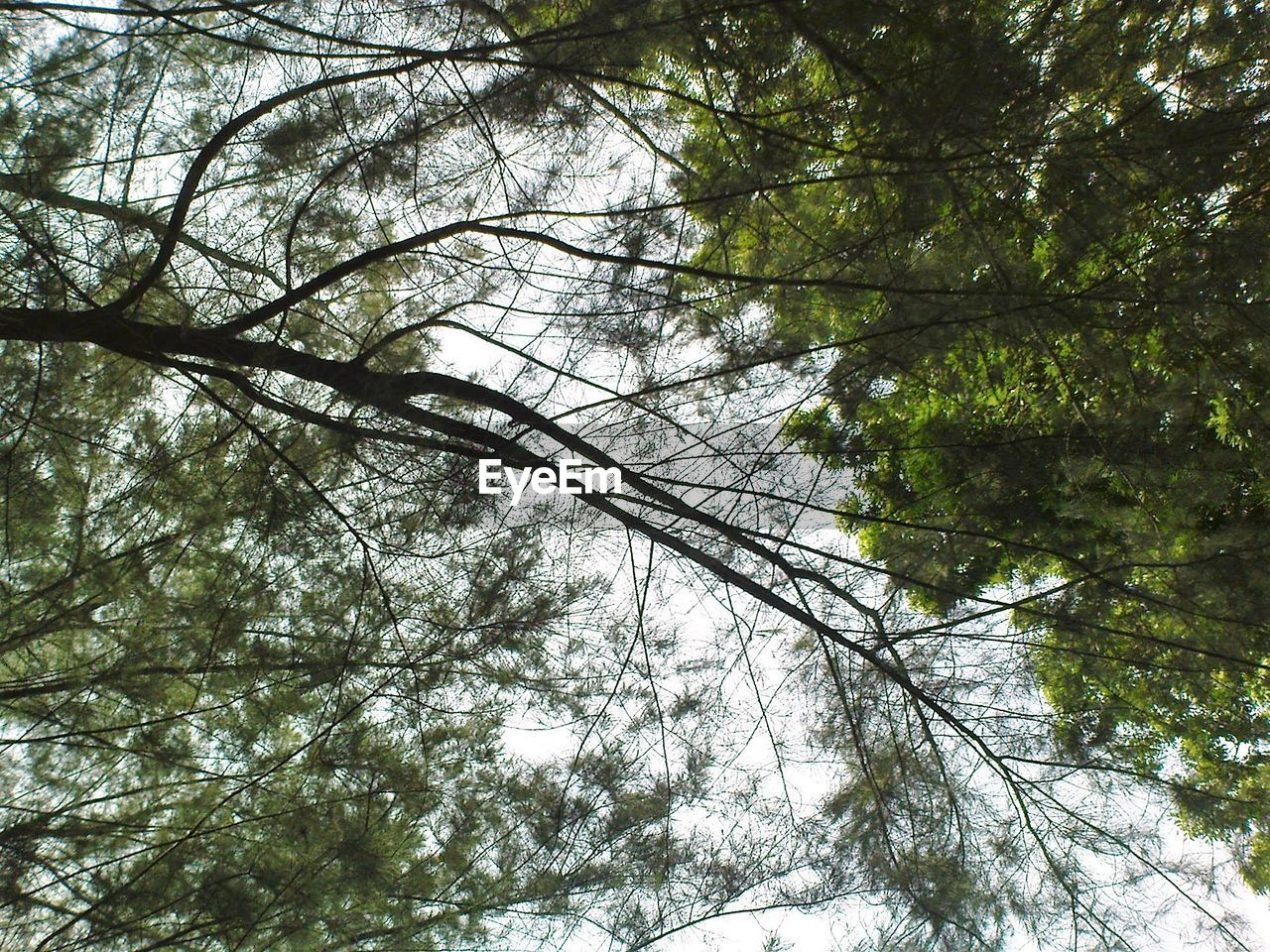 low angle view, tree, nature, branch, winter, day, beauty in nature, growth, forest, no people, snow, outdoors, cold temperature, tranquility, scenics, sky, bare tree