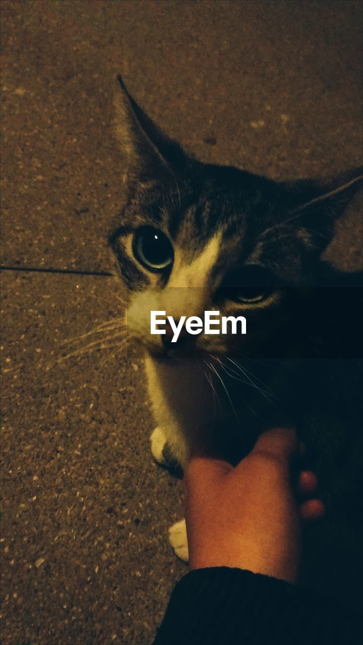 one animal, pets, domestic animals, animal themes, domestic cat, mammal, one person, human body part, real people, human hand, feline, holding, close-up, indoors, day