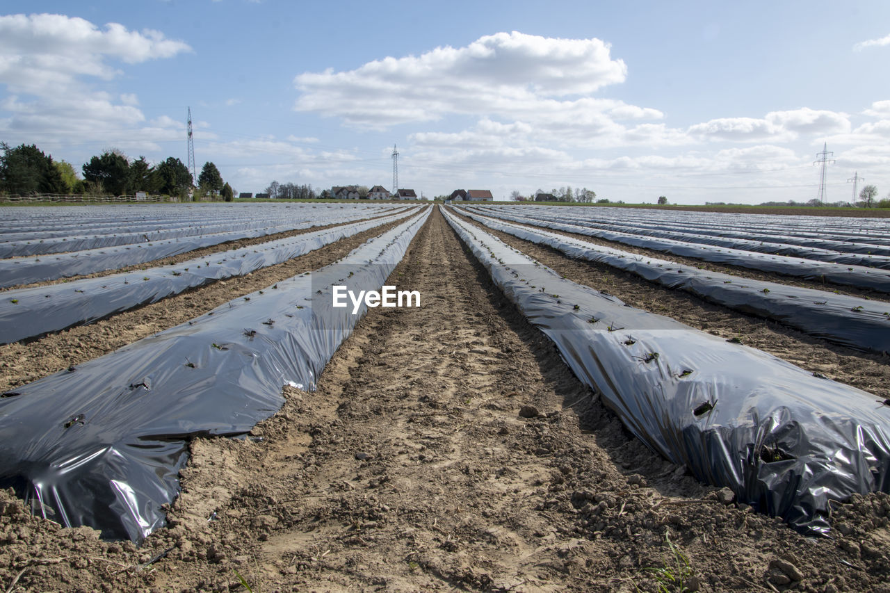 A freshly planted strawberry field is covered with a tarp. there are holes in the for the plants.