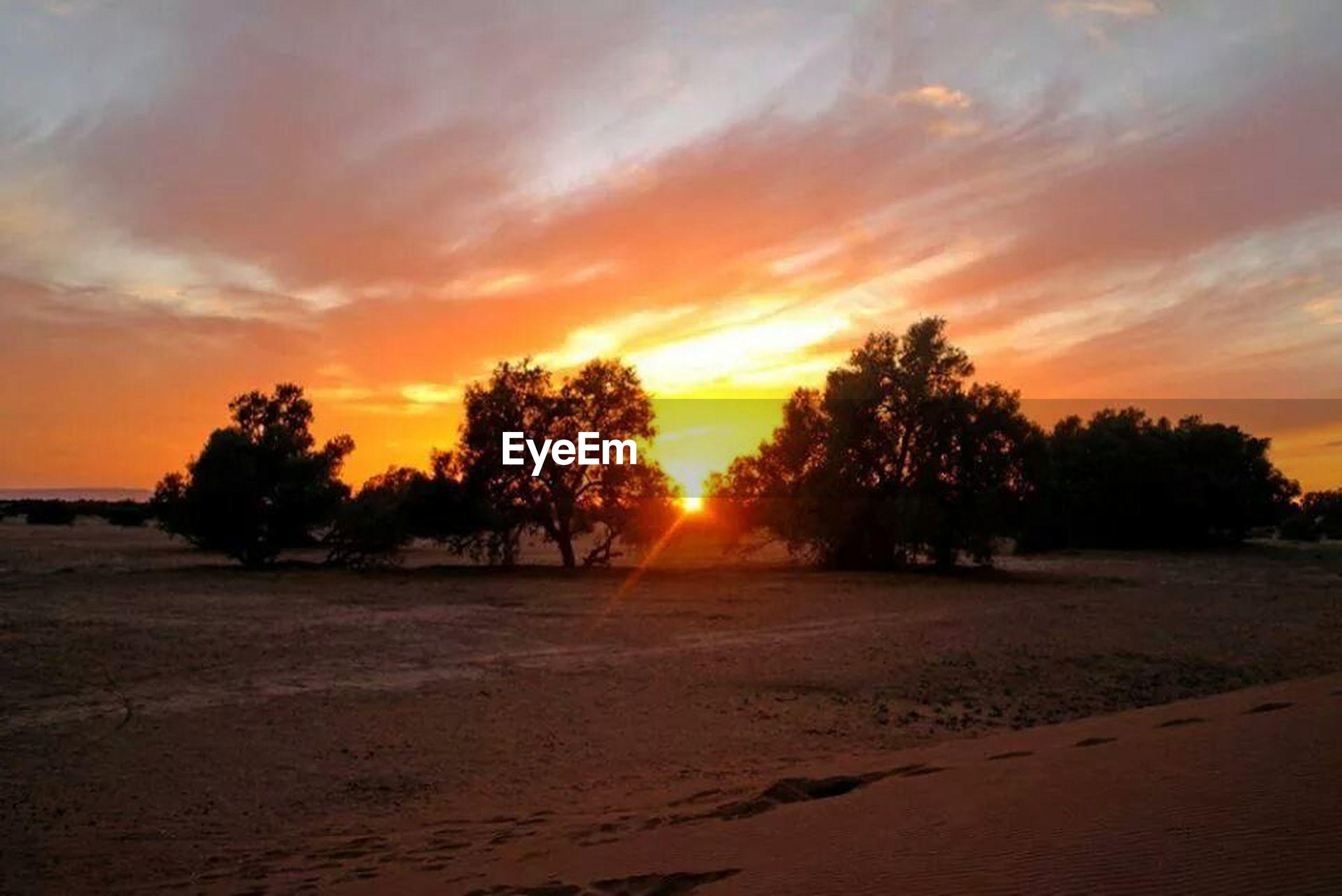 sunset, orange color, tranquil scene, scenics, tranquility, beauty in nature, sky, tree, beach, silhouette, sand, nature, idyllic, sun, cloud - sky, landscape, shore, non-urban scene, sunlight, outdoors