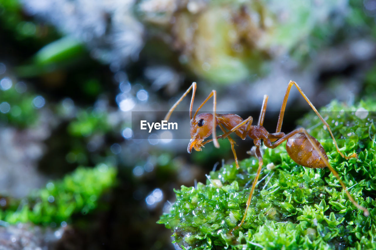 animal wildlife, animal themes, animal, one animal, animals in the wild, invertebrate, insect, close-up, plant, no people, green color, nature, day, selective focus, focus on foreground, animal antenna, leaf, plant part, growth, beauty in nature