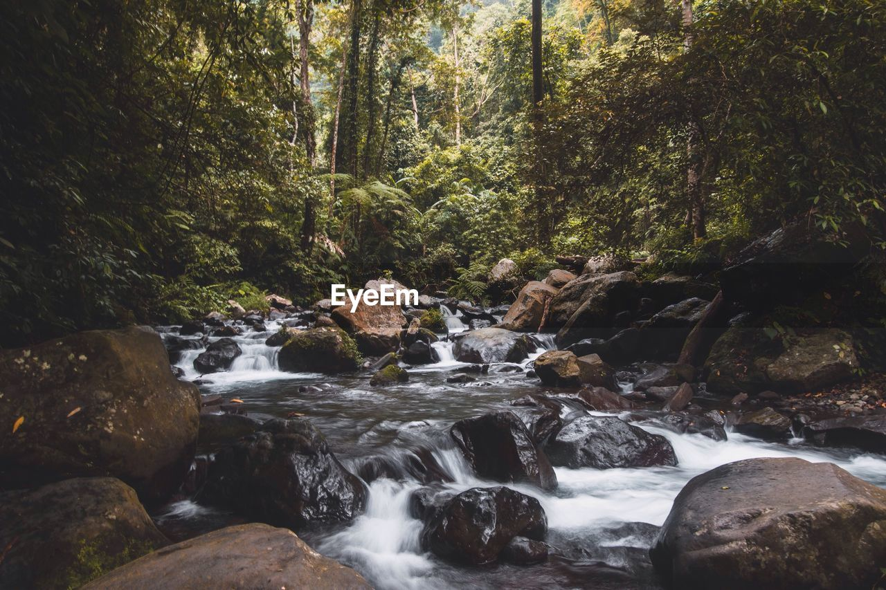 forest, water, nature, waterfall, rock - object, flowing water, tree, beauty in nature, stream, no people, long exposure, motion, tranquil scene, scenics, day, tranquility, outdoors, growth