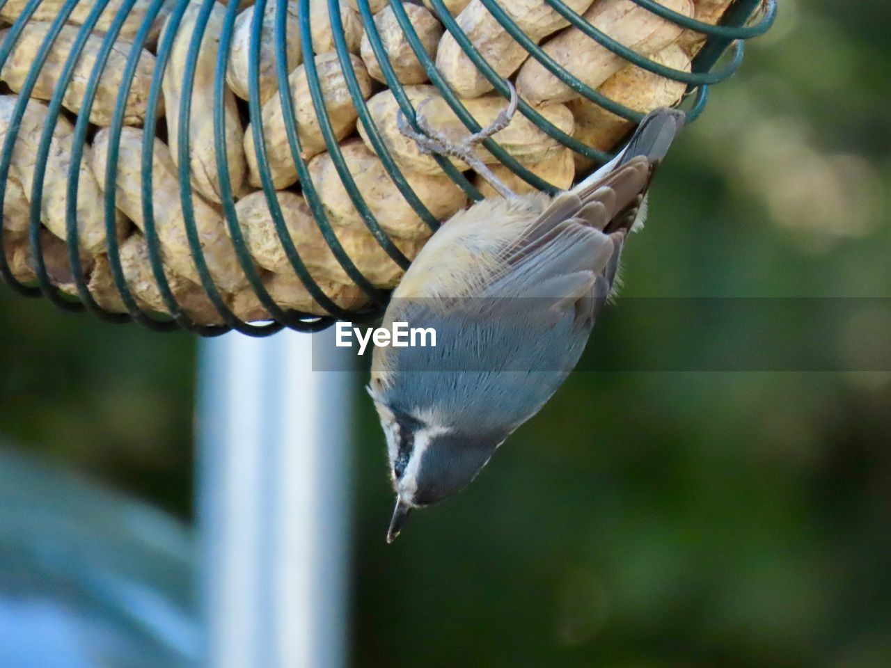 animal, animal themes, one animal, animals in the wild, animal wildlife, bird, vertebrate, focus on foreground, close-up, no people, day, nature, beauty in nature, outdoors, plant, tree, animal body part, zoology, spread wings, white color, animal neck, marine