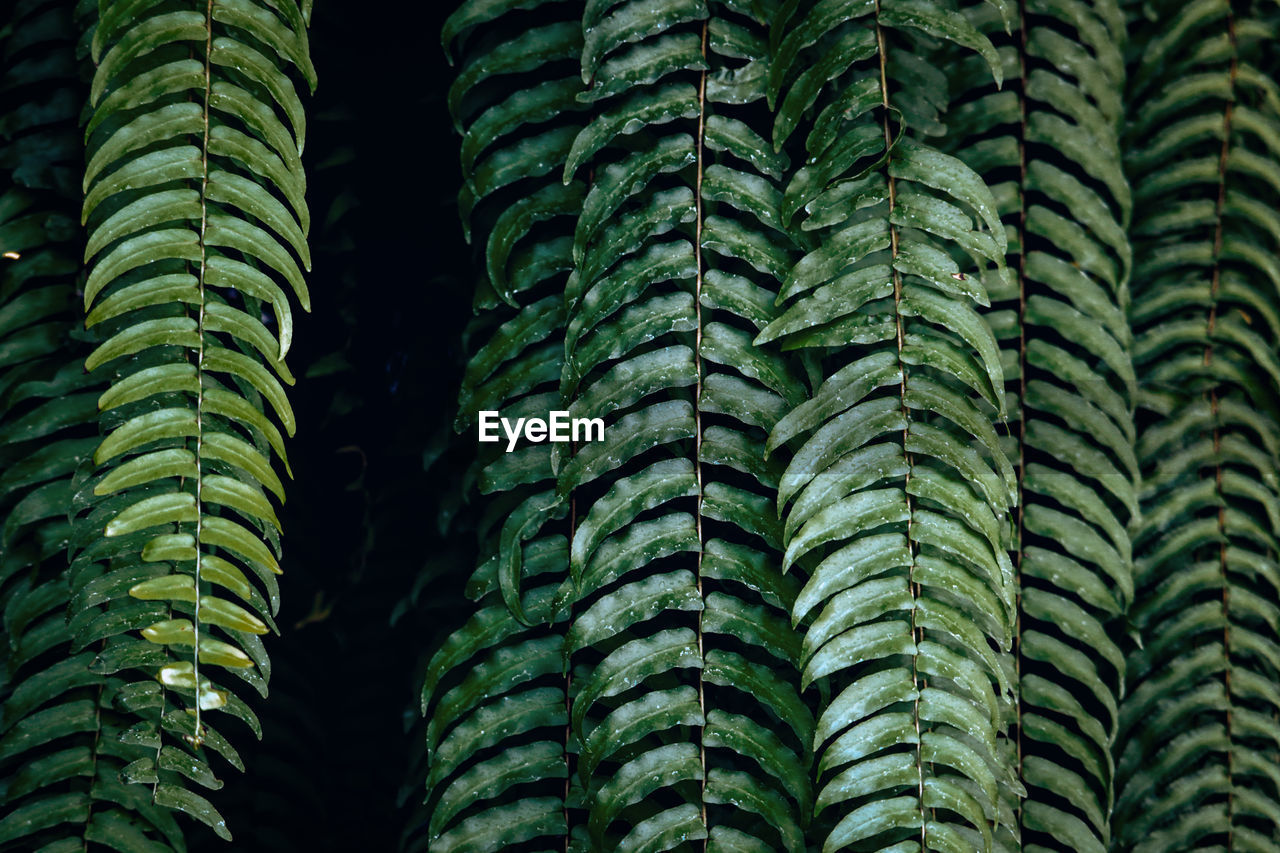 Full frame shot of ferns