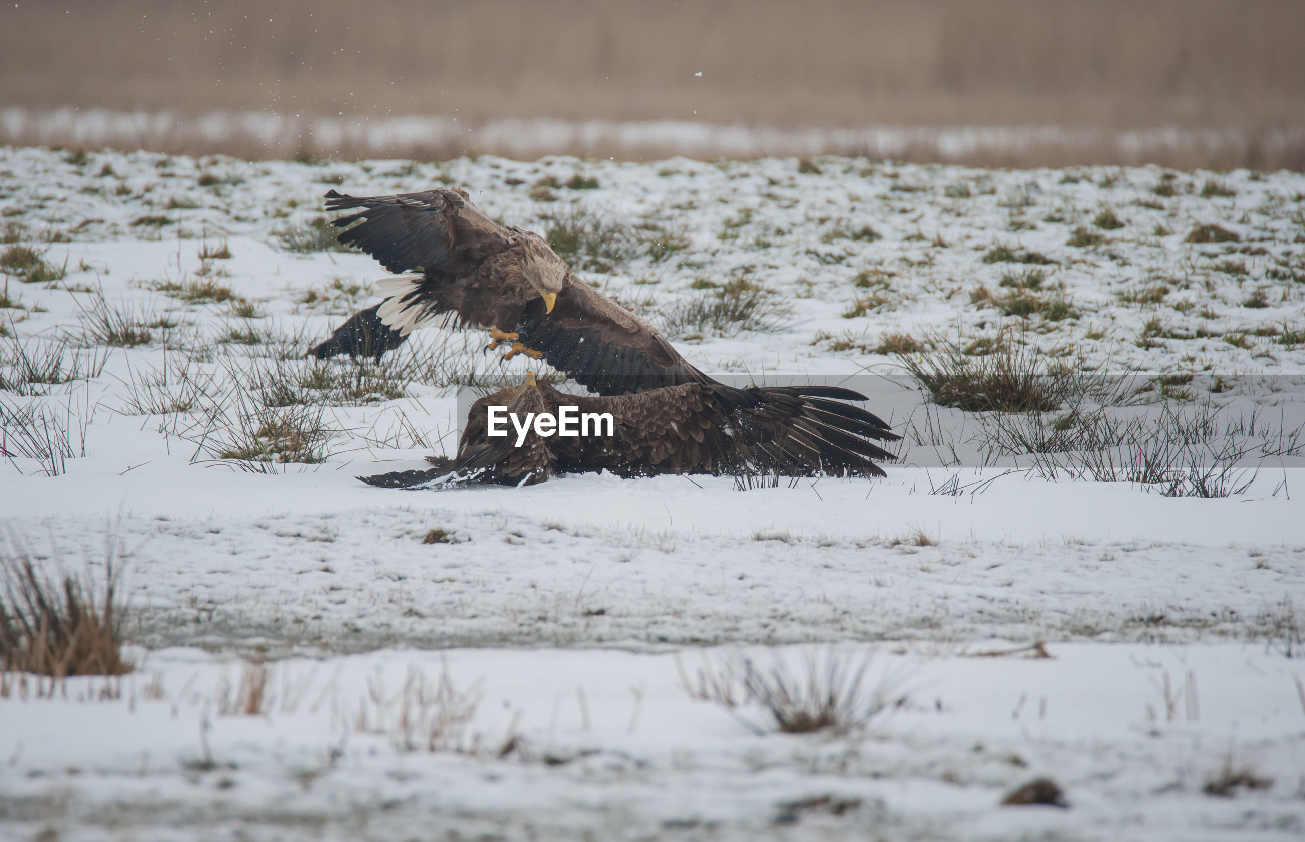 View of bird on snow covered land
