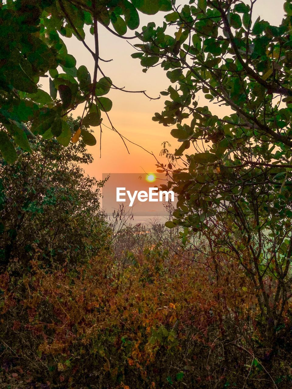 plant, tree, growth, sky, beauty in nature, tranquility, nature, sunset, branch, plant part, leaf, no people, tranquil scene, scenics - nature, sun, orange color, outdoors, sunlight, idyllic, fruit