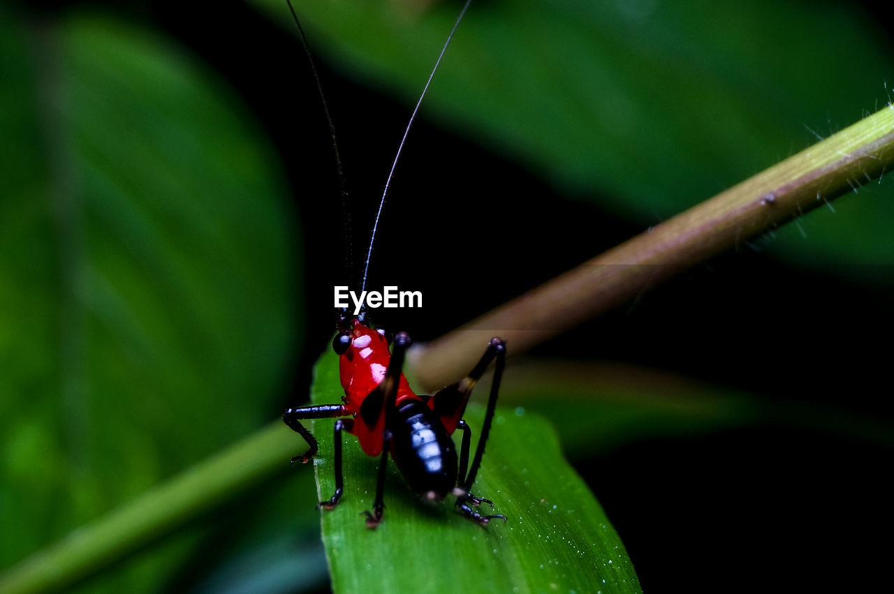 insect, animals in the wild, animal themes, one animal, green color, red, animal wildlife, close-up, outdoors, day, leaf, no people, nature, damselfly, ladybug, tiny