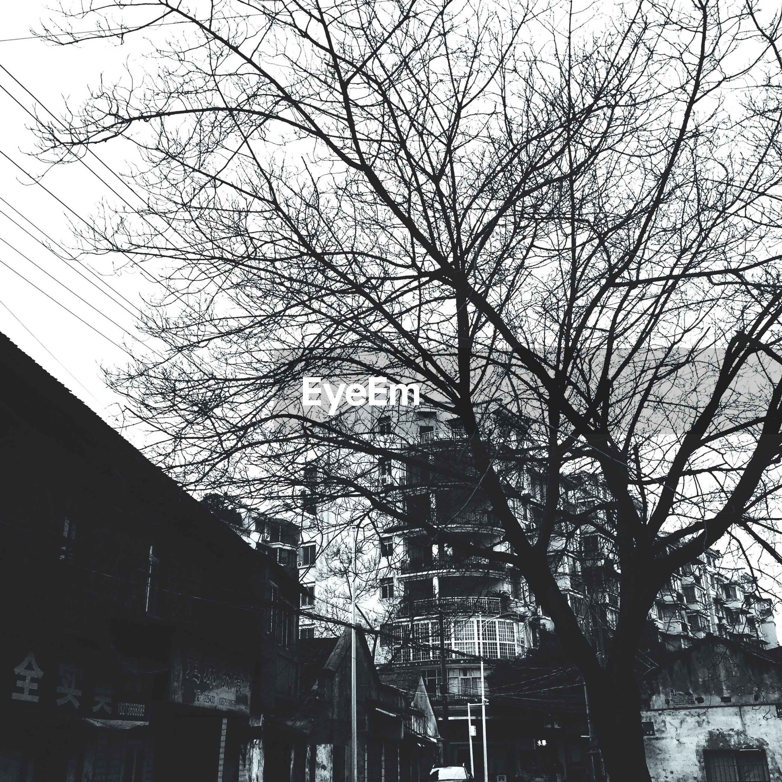 low angle view, architecture, built structure, building exterior, tree, branch, bare tree, building, sky, lighting equipment, residential building, residential structure, power line, house, street light, city, outdoors, no people, illuminated, electricity