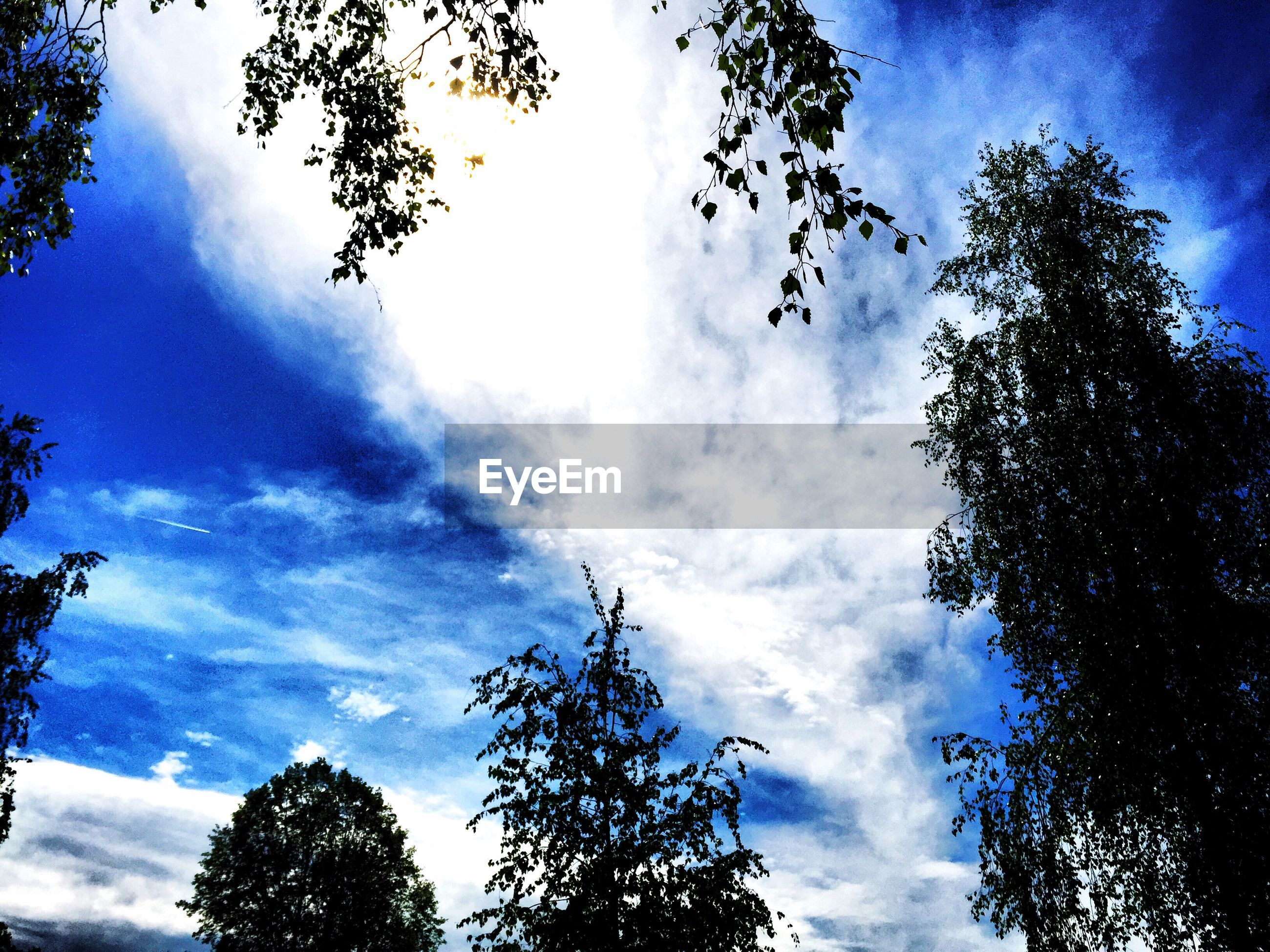 Low angle view of tree twigs against cloudy blue sky