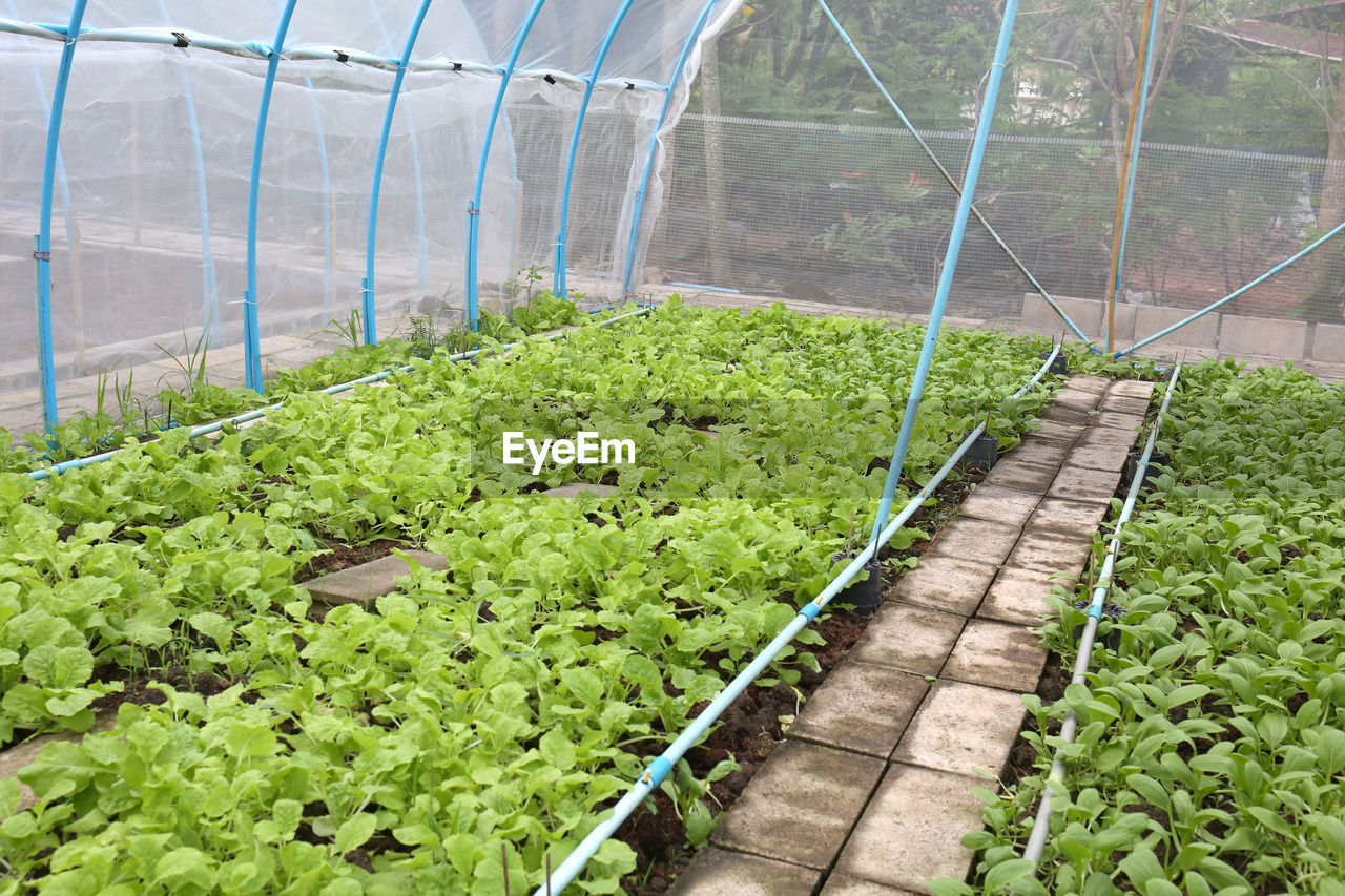Plants growing in greenhouse