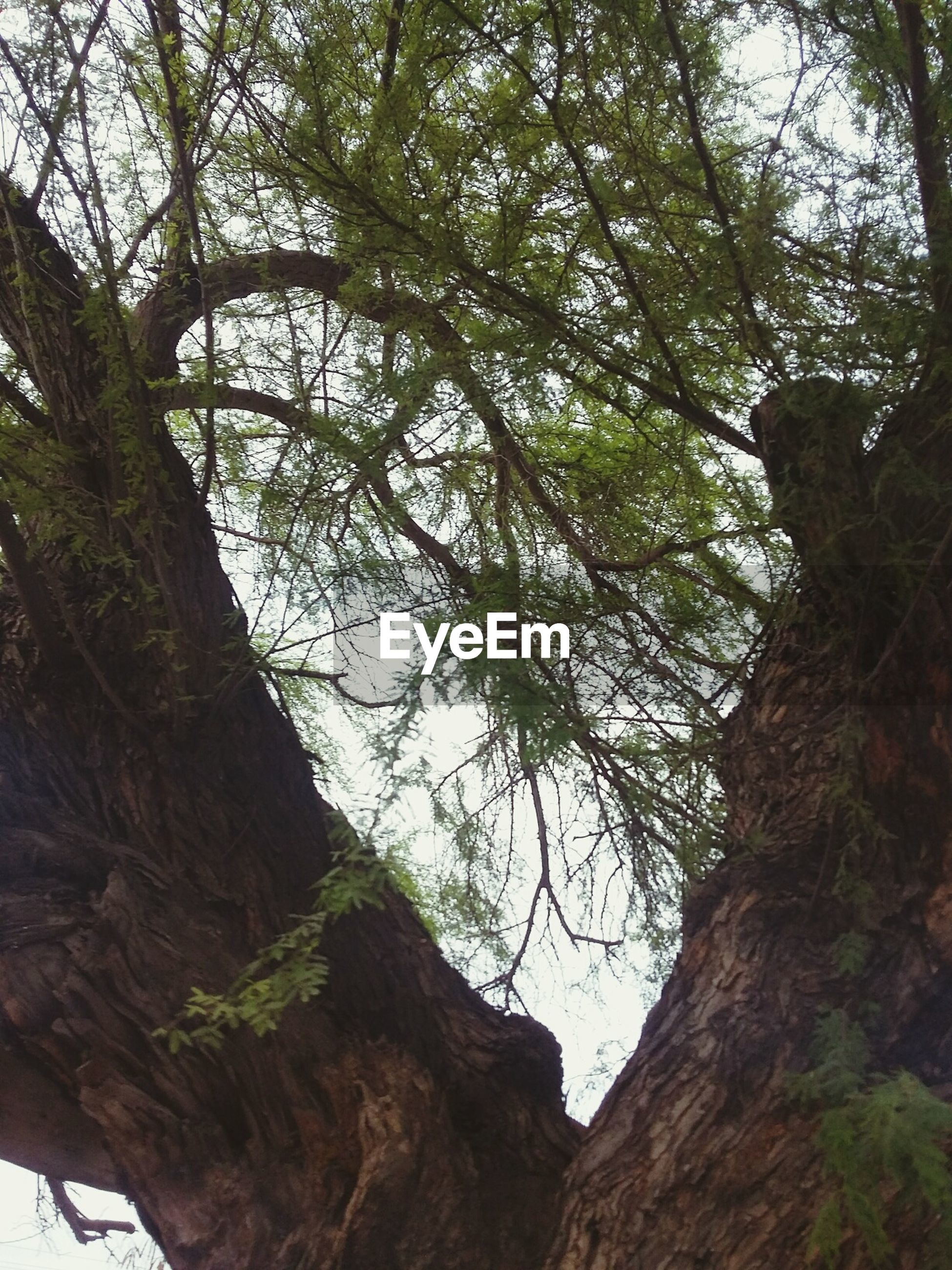 tree, nature, beauty in nature, low angle view, growth, forest, tranquility, no people, outdoors, day, branch, backgrounds, sky
