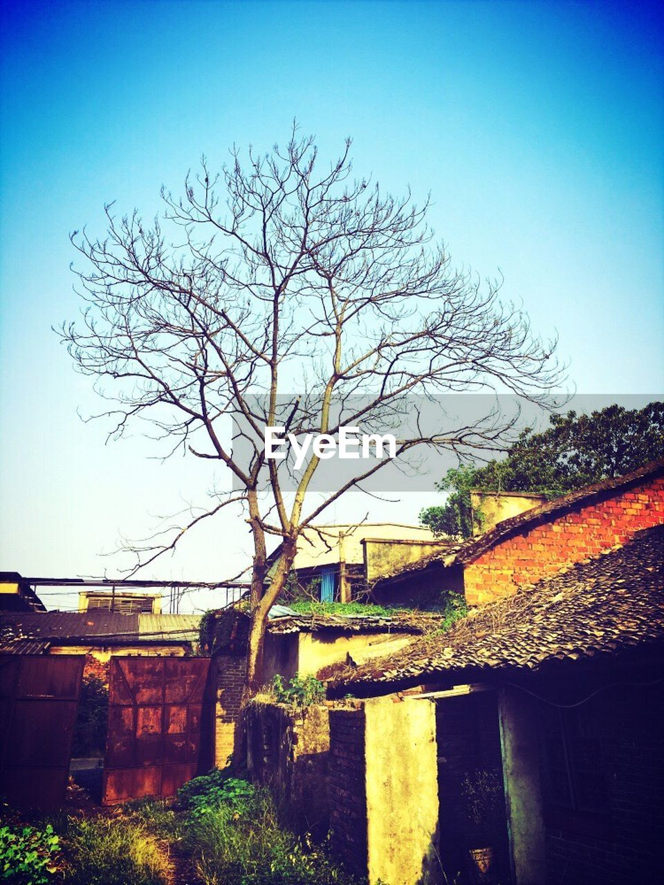 architecture, built structure, bare tree, building exterior, tree, no people, outdoors, sky, day, clear sky, nature, city