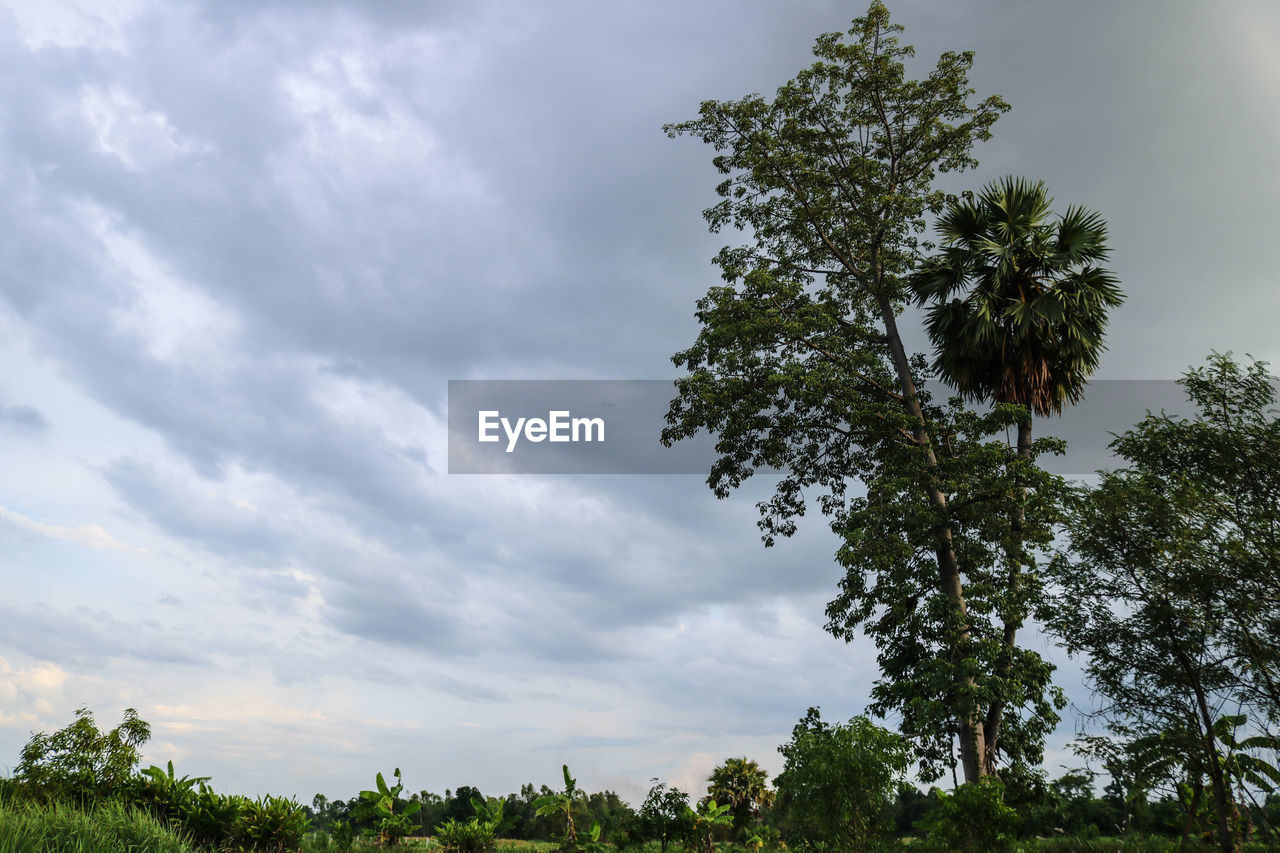 tree, plant, cloud - sky, sky, beauty in nature, growth, nature, tranquility, no people, scenics - nature, day, tranquil scene, outdoors, low angle view, green color, non-urban scene, land, idyllic, branch