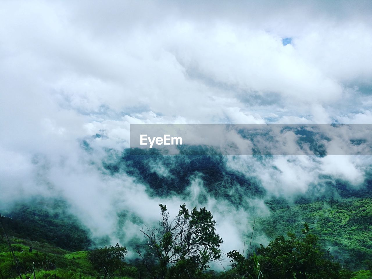 nature, beauty in nature, tree, tranquility, scenics, day, tranquil scene, no people, sky, outdoors, forest, cloud - sky, growth, landscape, power in nature, mountain, forest fire