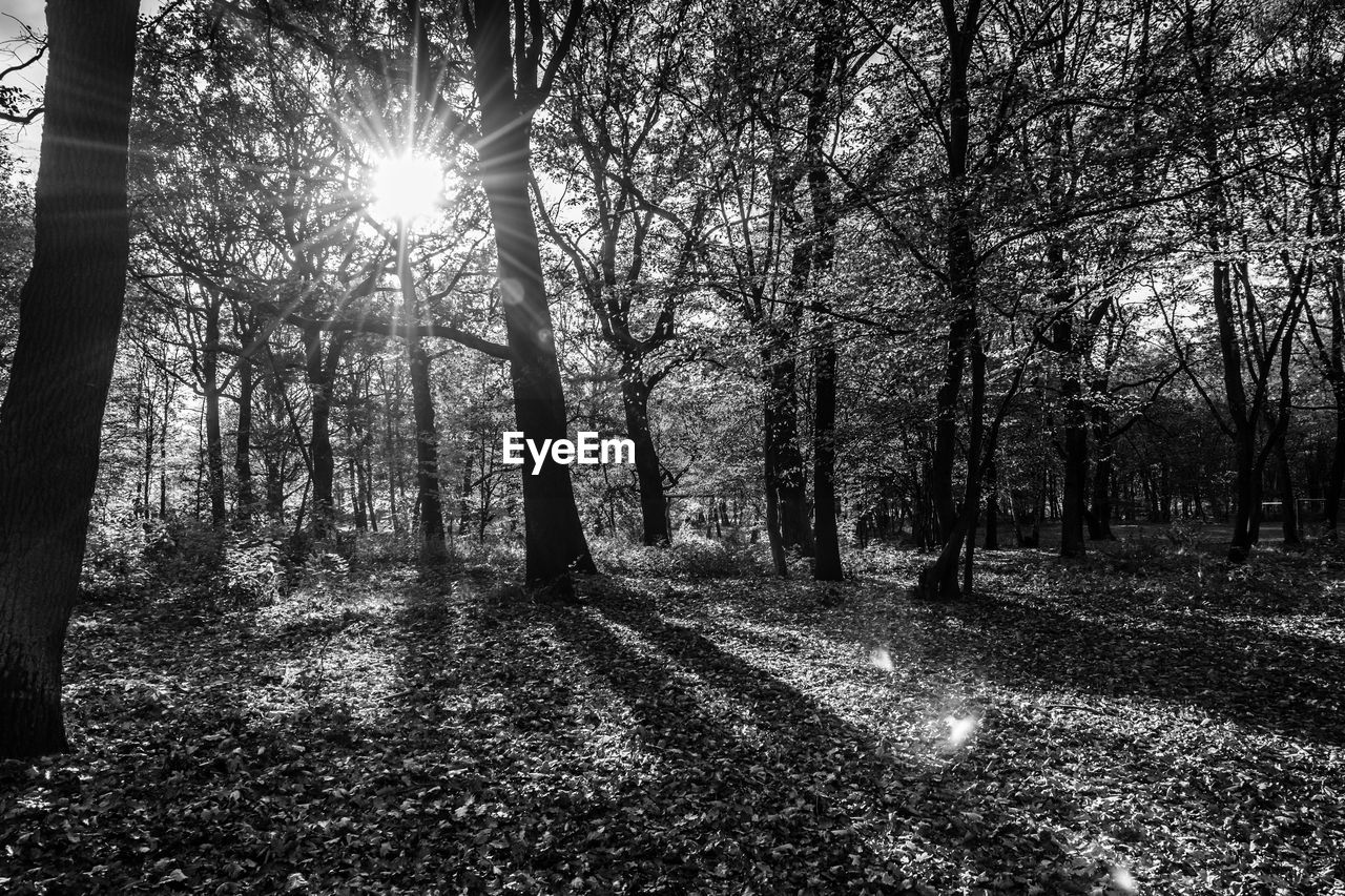 tree, sunbeam, nature, sunlight, sun, tranquility, tranquil scene, scenics, no people, beauty in nature, forest, outdoors, day